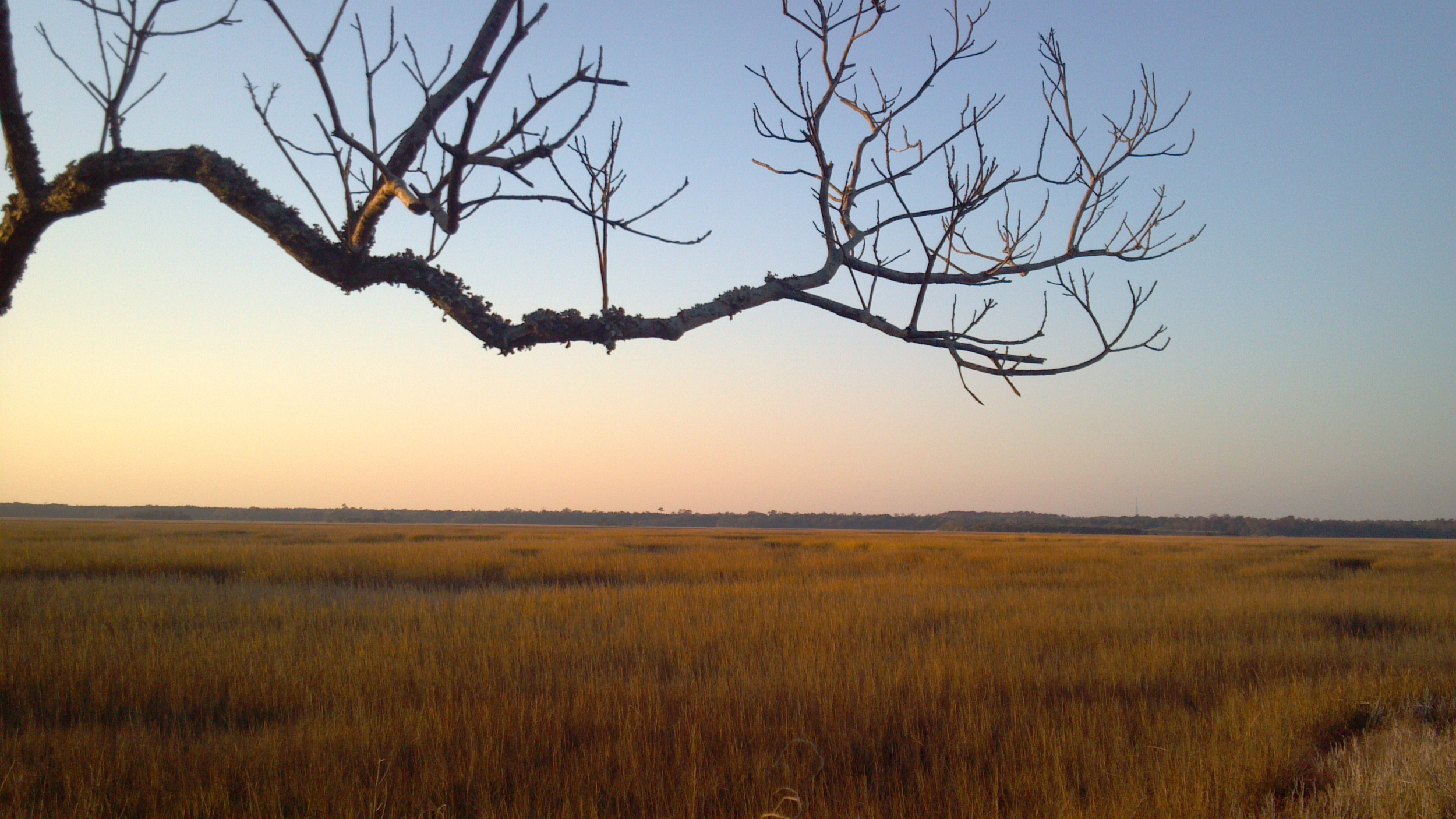 Coastal wetlands in Pender County, North Carolina