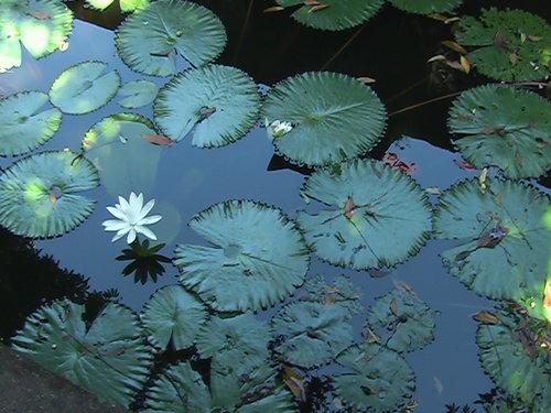 Lotus-Soulshine_Bali-20000000006095763-500x375.jpg