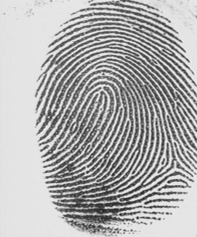 Fingerprint - loop.jpg