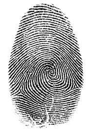 fingerprint whorl .jpeg