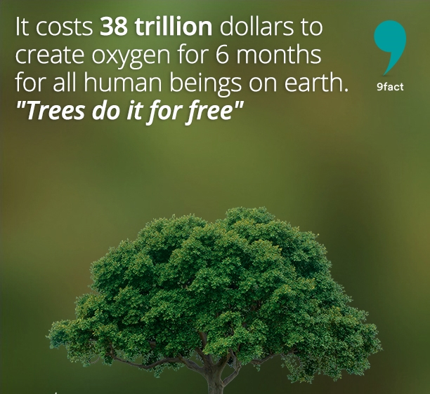 It-costs-38-trillion-dollars-to-create-oxygen-for-6-months-for-all-human-beings-on-earth.-Trees-do-it-for-free-nowgags-9fact-facts.jpg