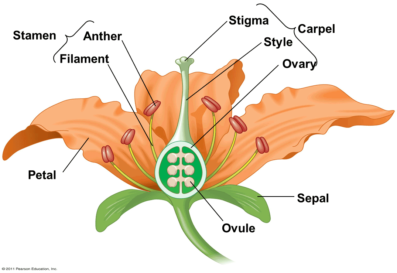 idealizedflower1.png