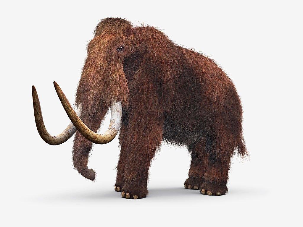 wooly-mammoth-1024.jpg