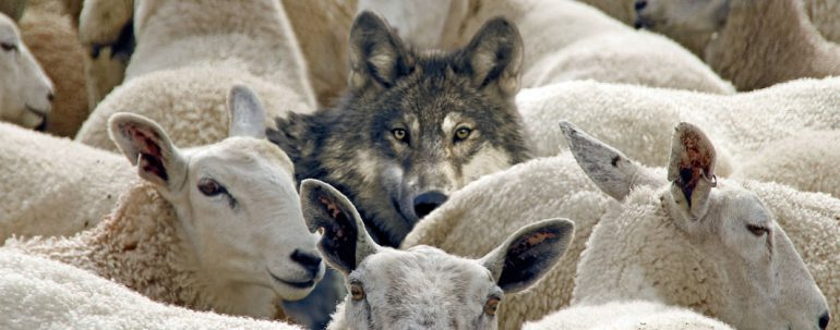 Wolves Among Sheep.jpg