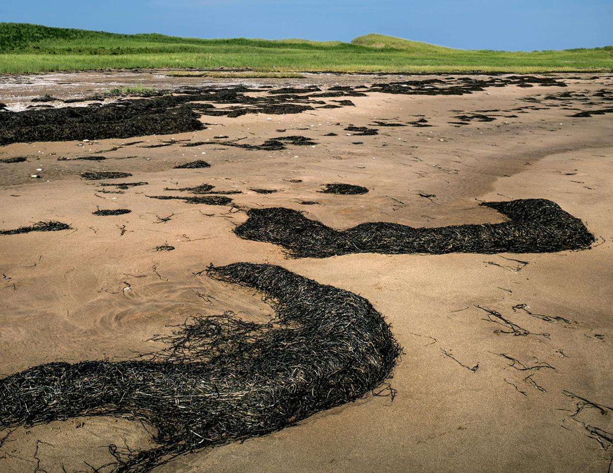 Sea Grass ashore
