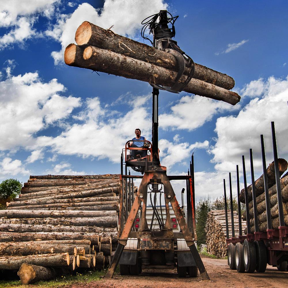 Betts Sawmill Shoot-1.jpg