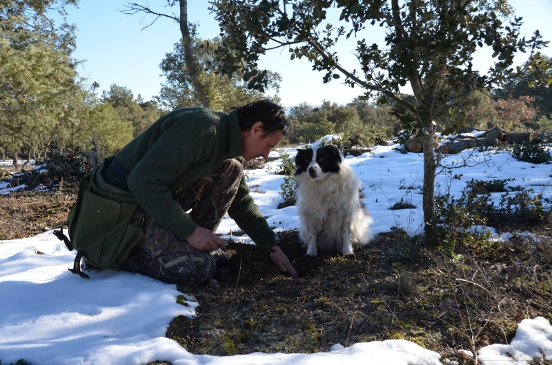 Digging for a black truffle mid-winter in Provence.