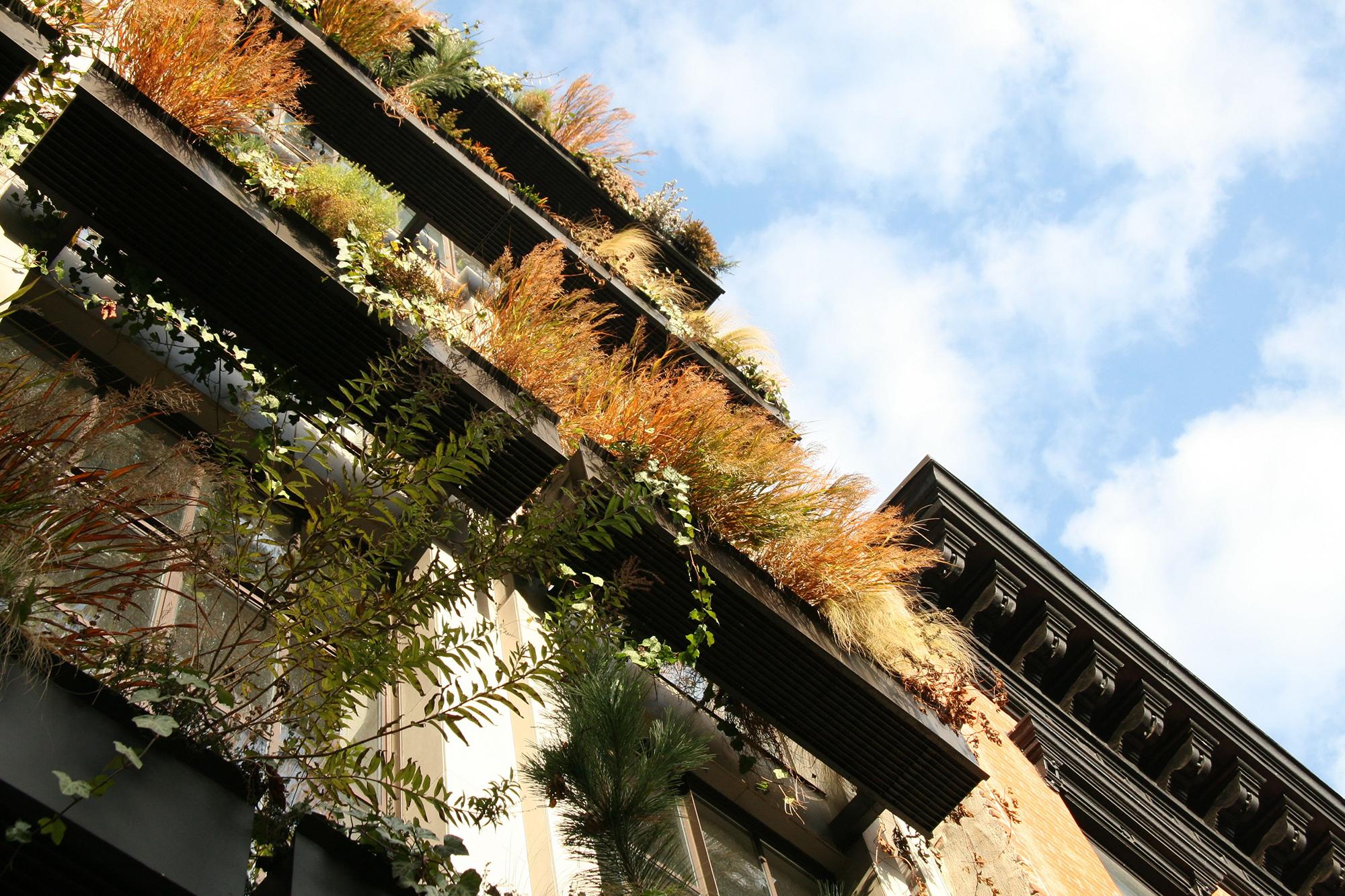 VERDANT, The Flowerbox Building, Mac Carbonell designer, Contemporary landscape, New York landscape design