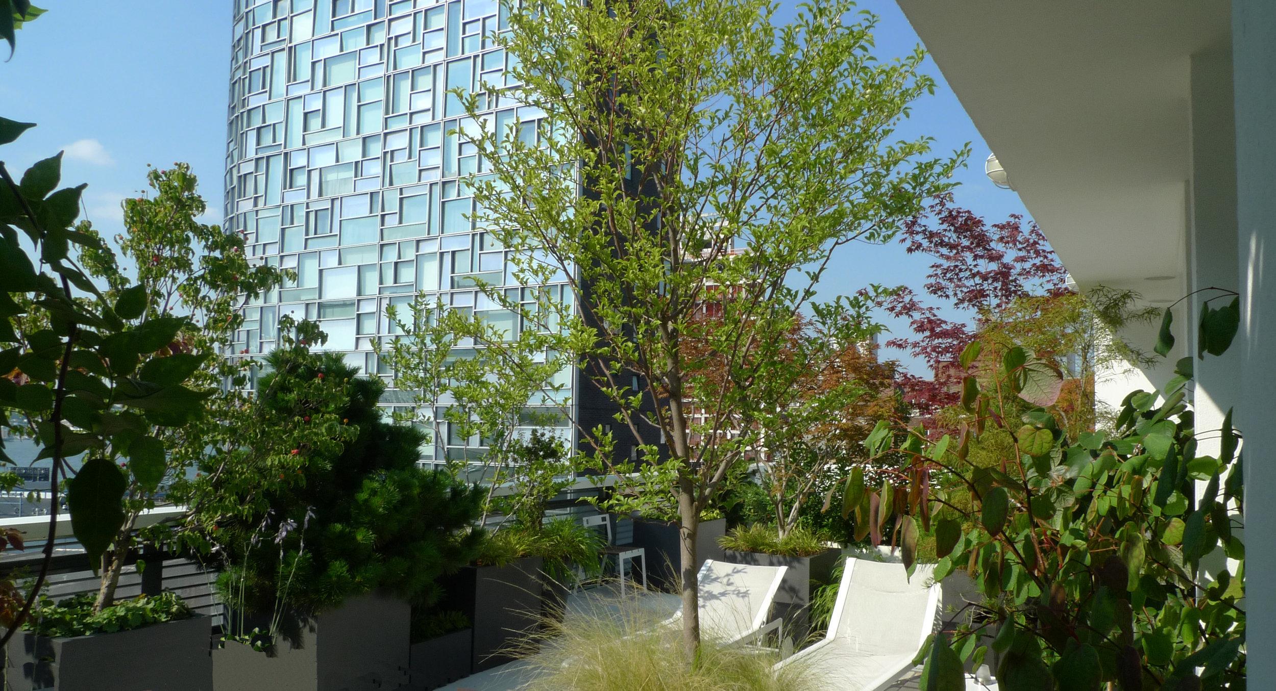 VERDANT, Metal Shutter House, Mac Carbonell designer, Contemporary landscape, New York landscape design