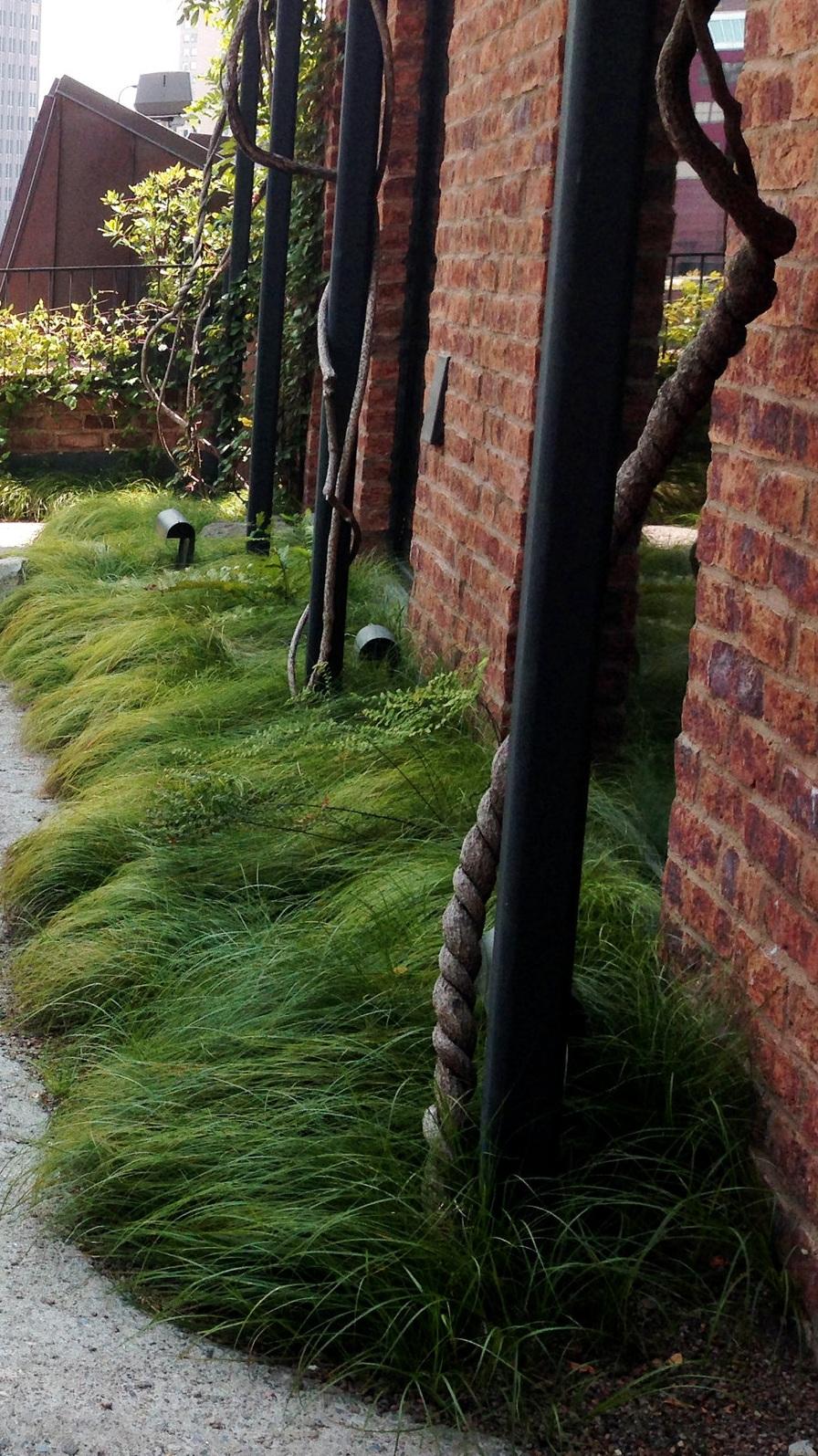 Carex+pensylvanica+-+Greenwich+Hotel.jpg