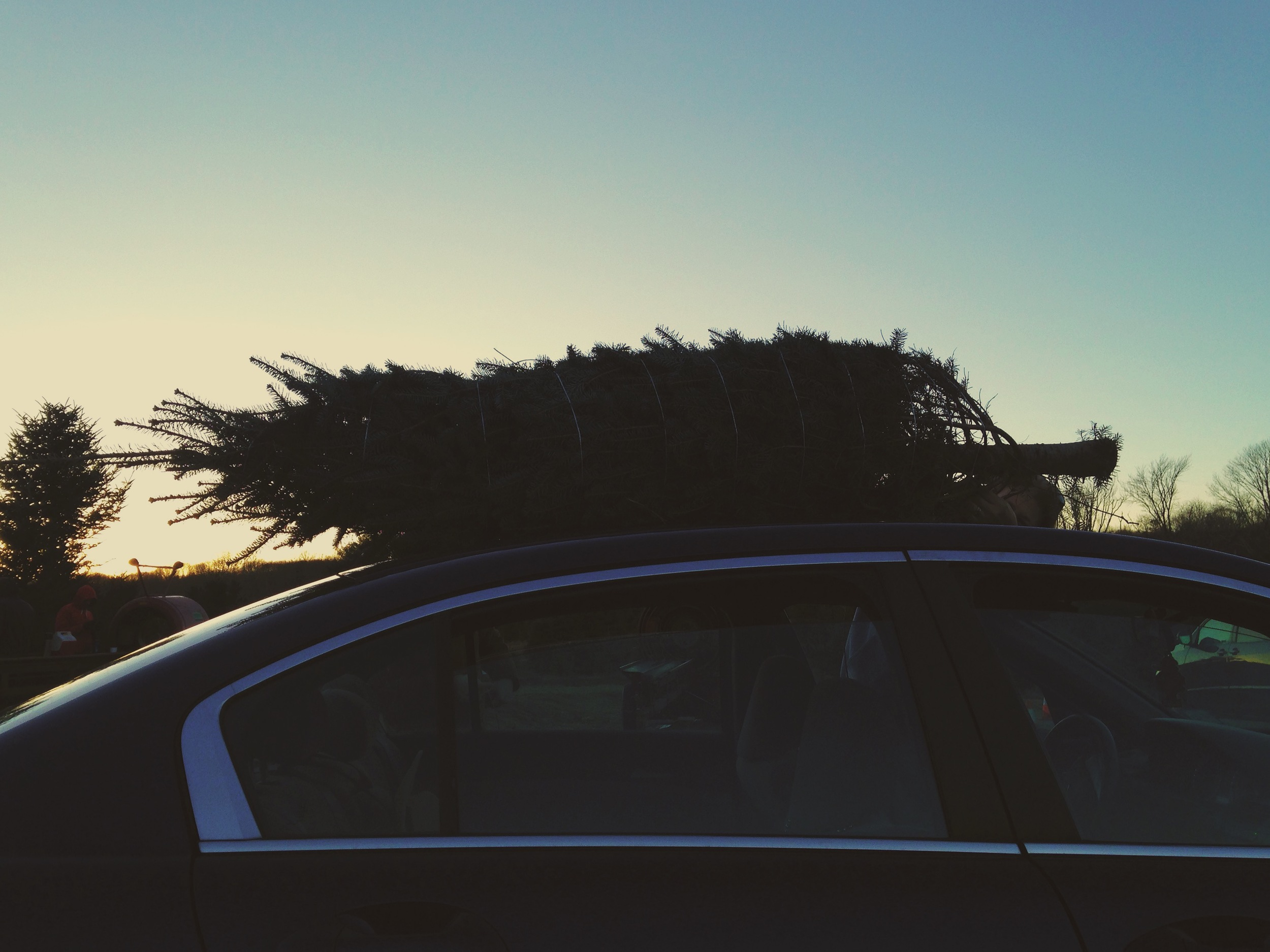 My first Christmas tree farm(!) and a beautiful Thanksgiving with Brett's family.