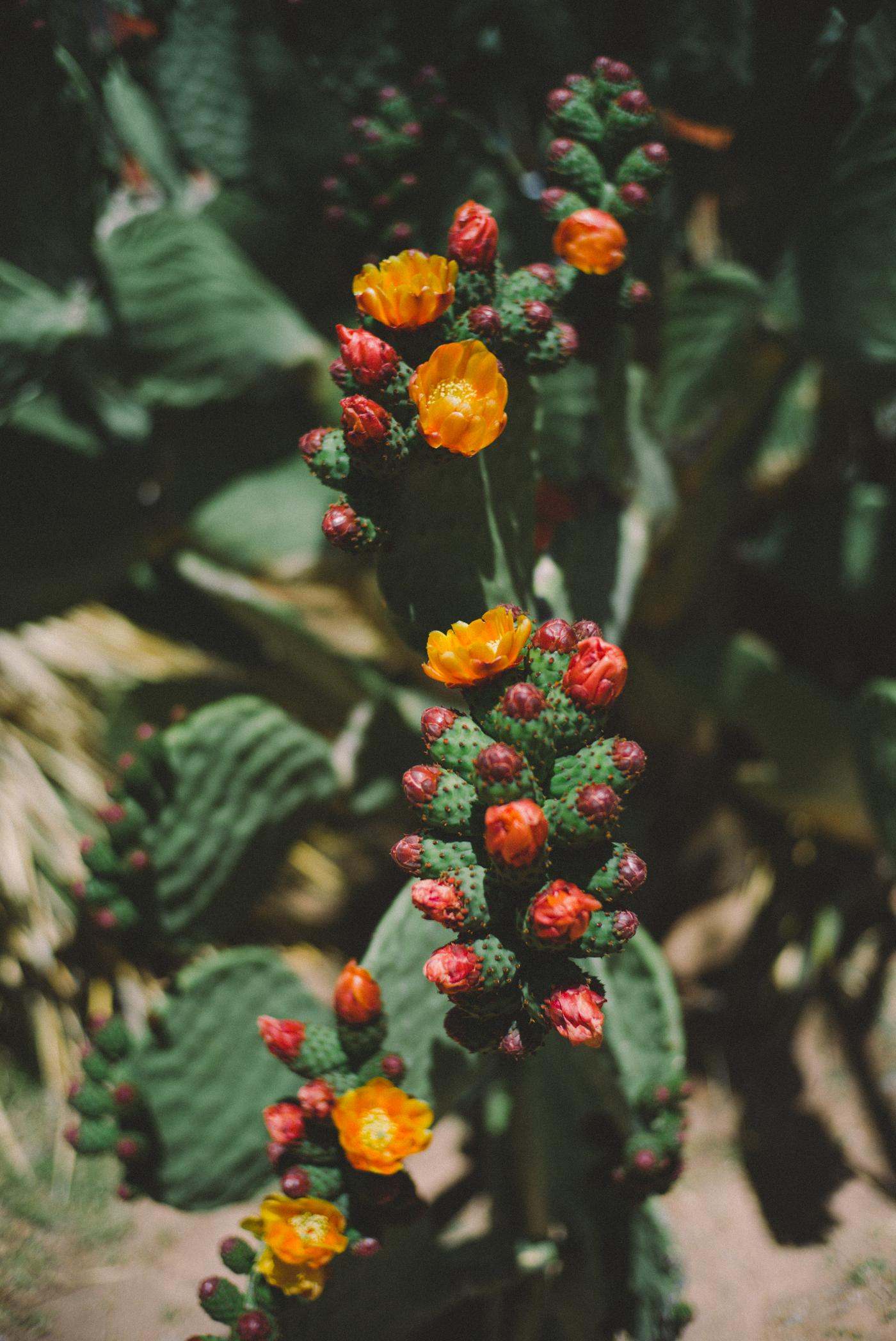 cactus-1009576.jpg