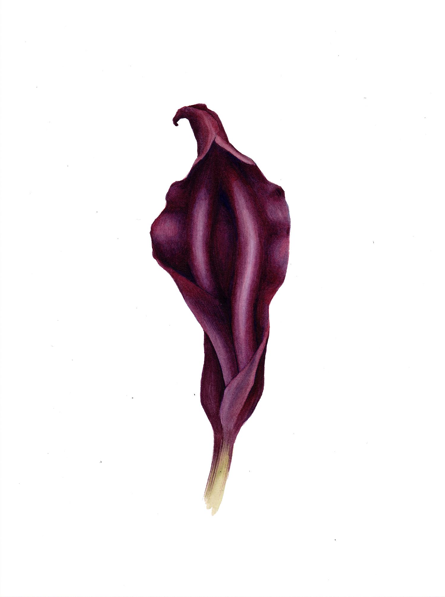 Divine Purple Yoniflower