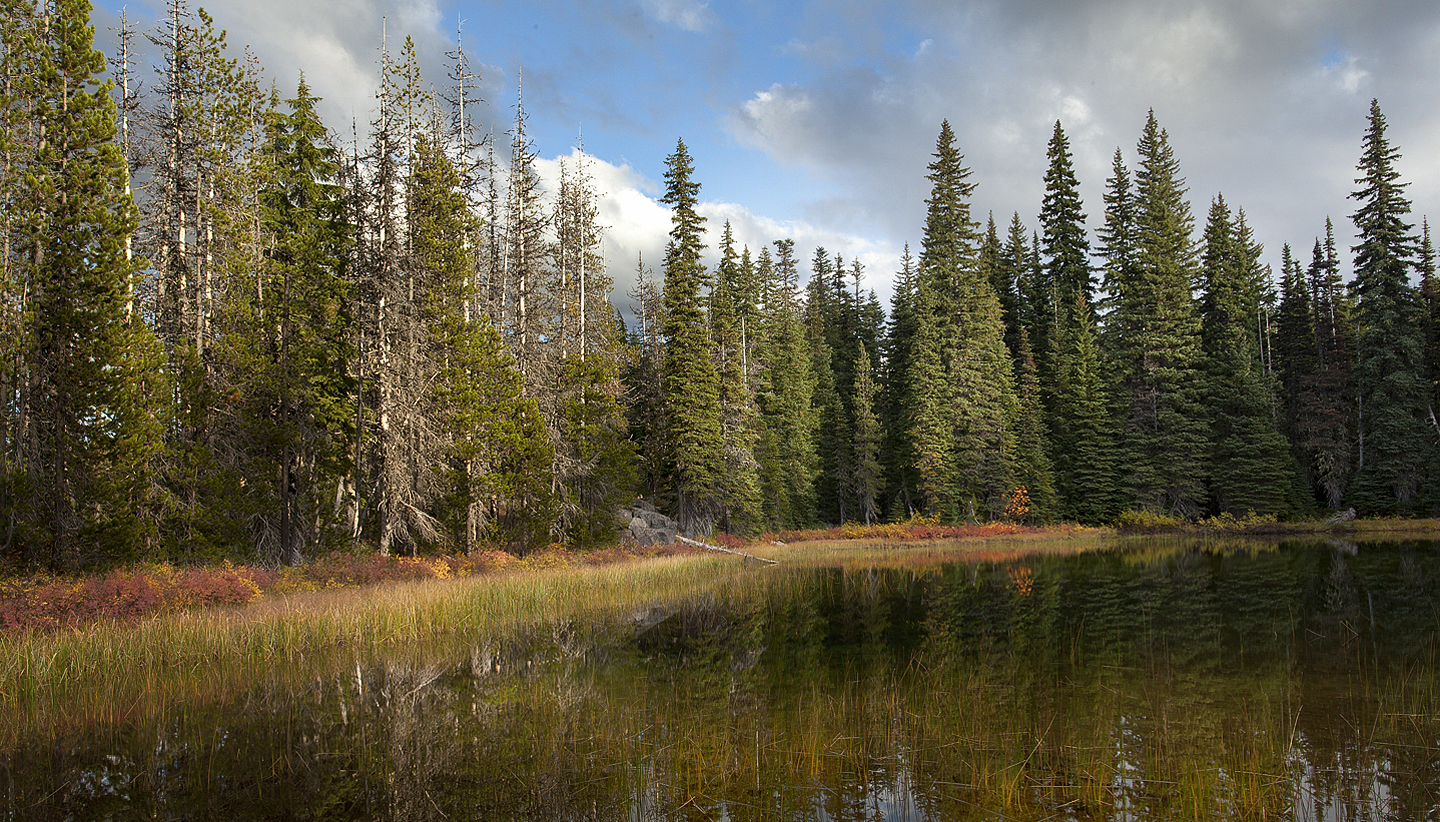 High Meadow Pond   – Dennis Schmidling