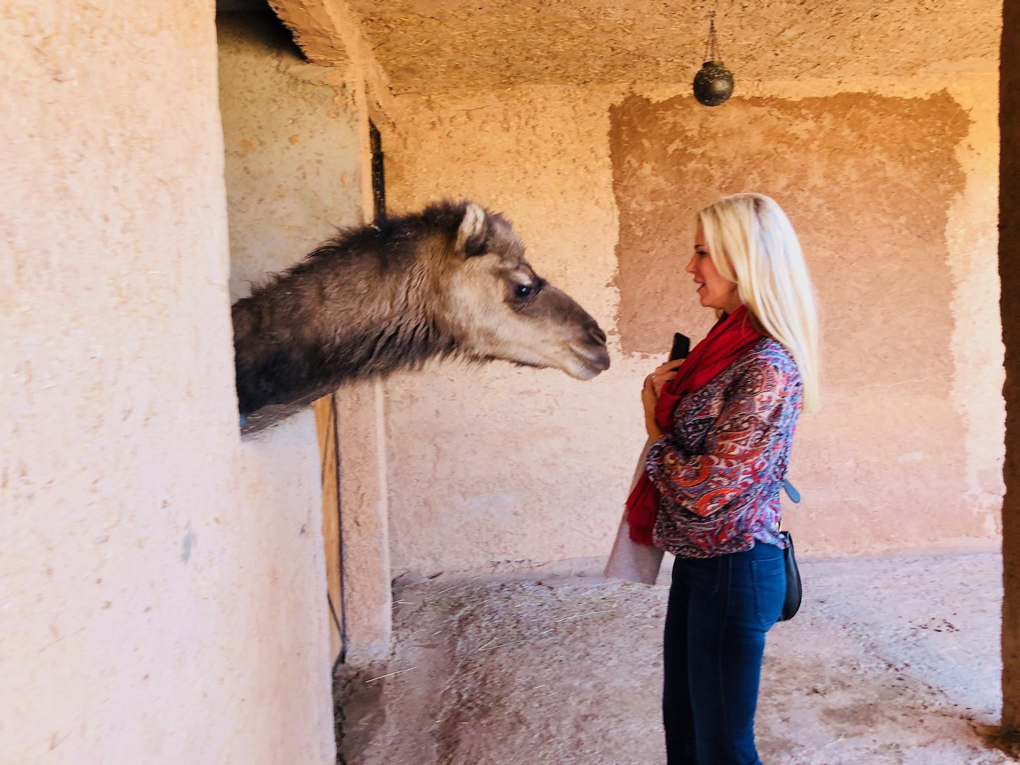 vanessa camel.JPG