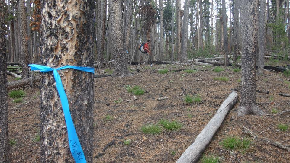 Fieldwork Yellowstone 2014
