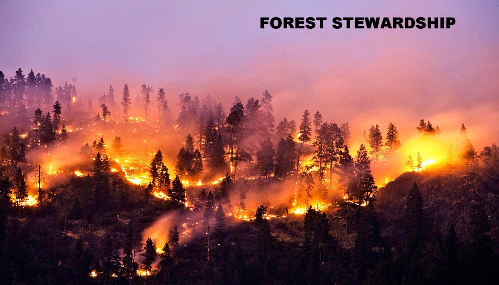 wildfire-on-mountain_1600.jpg