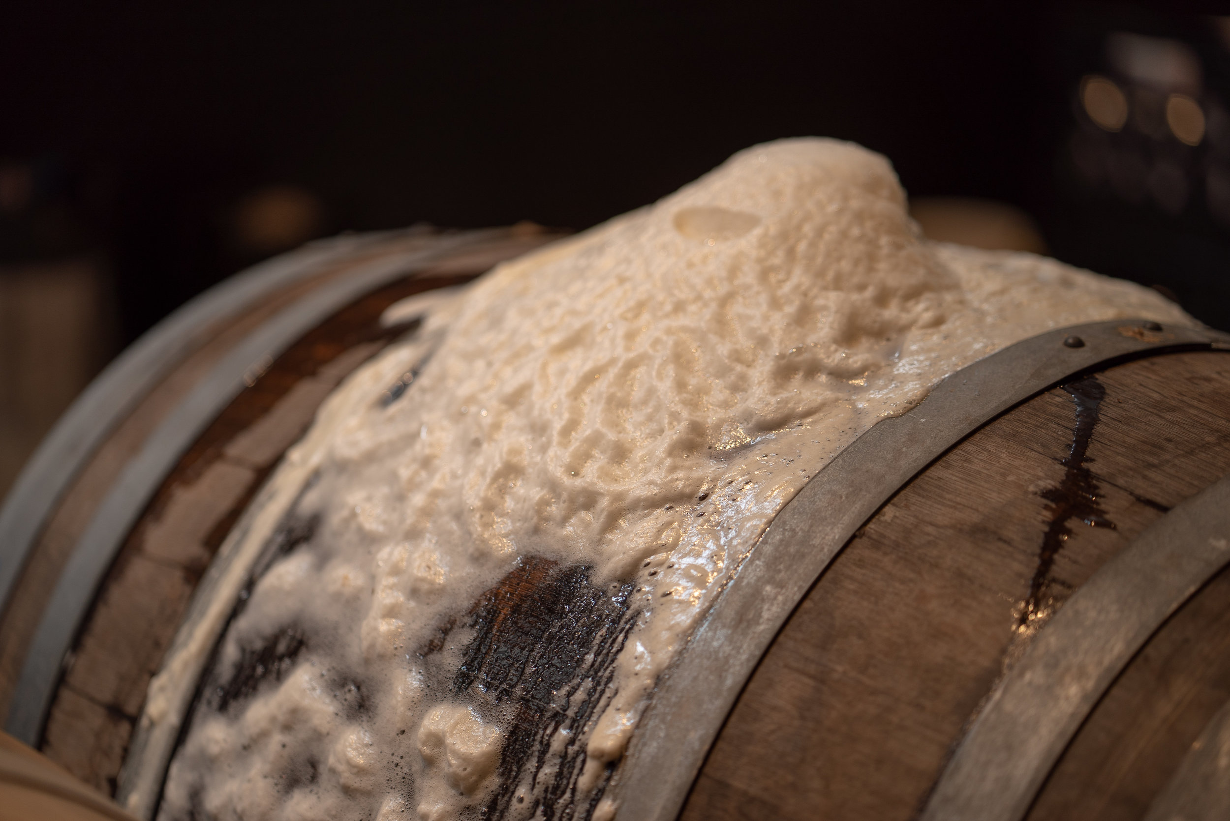 Fermented in oak barrels… - Our mixed culture ales are inspired by fermentation techniques from a simpler agrarian time, before modern monoculture fermentation transformed beer from a complex and nuanced beverage into the product of industry and clever marketing.