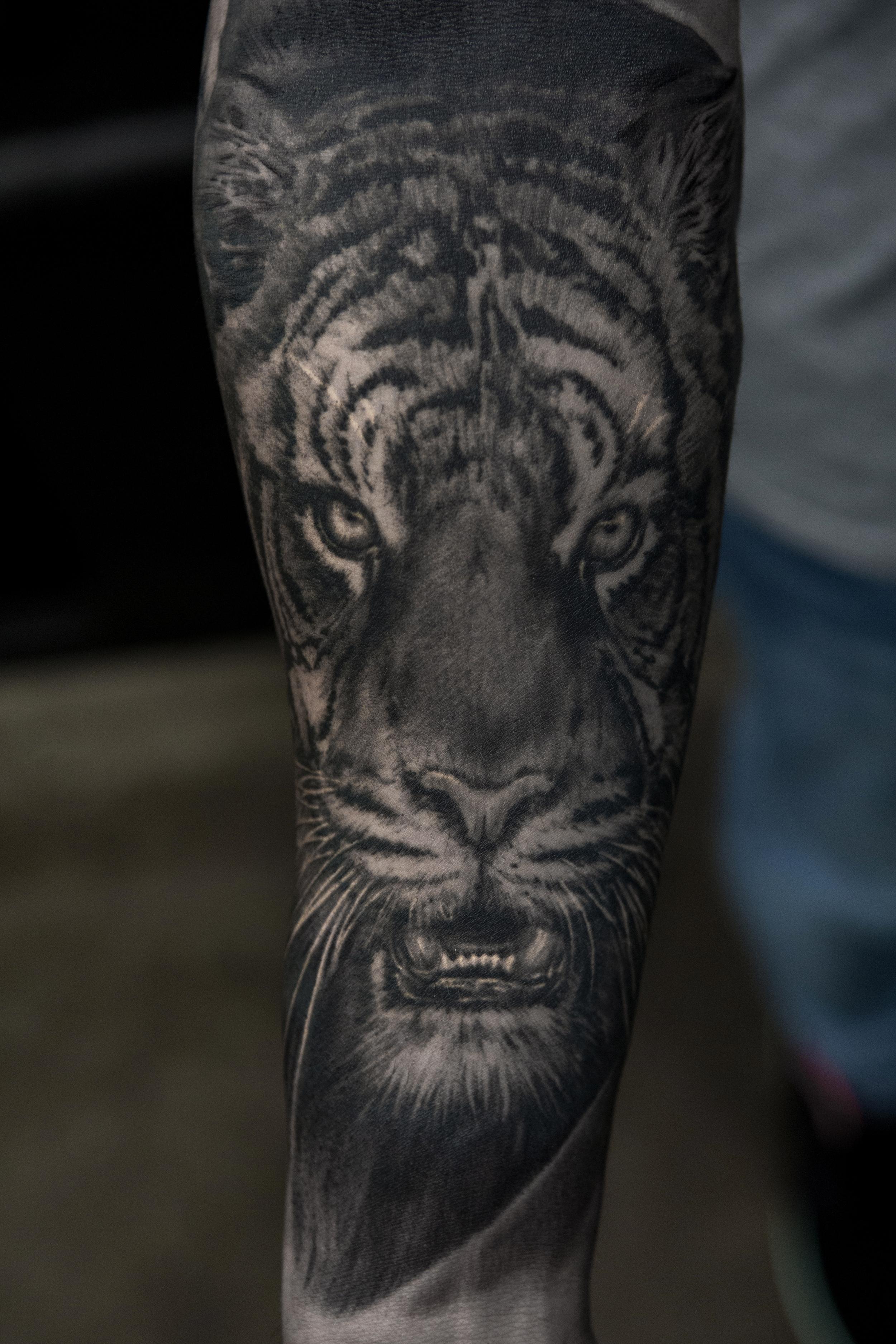 tigerBB.jpg