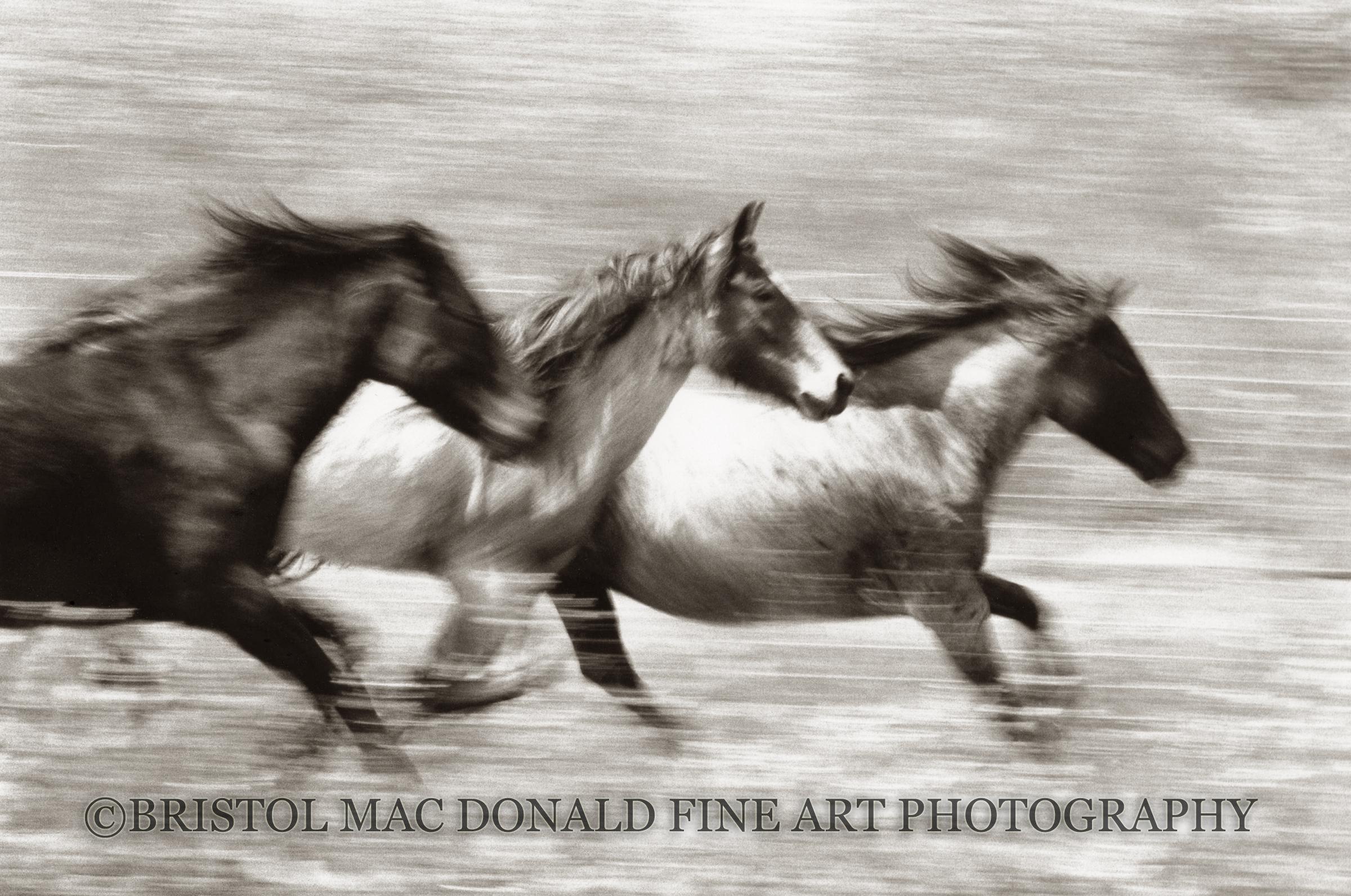 Mustangs in Flight