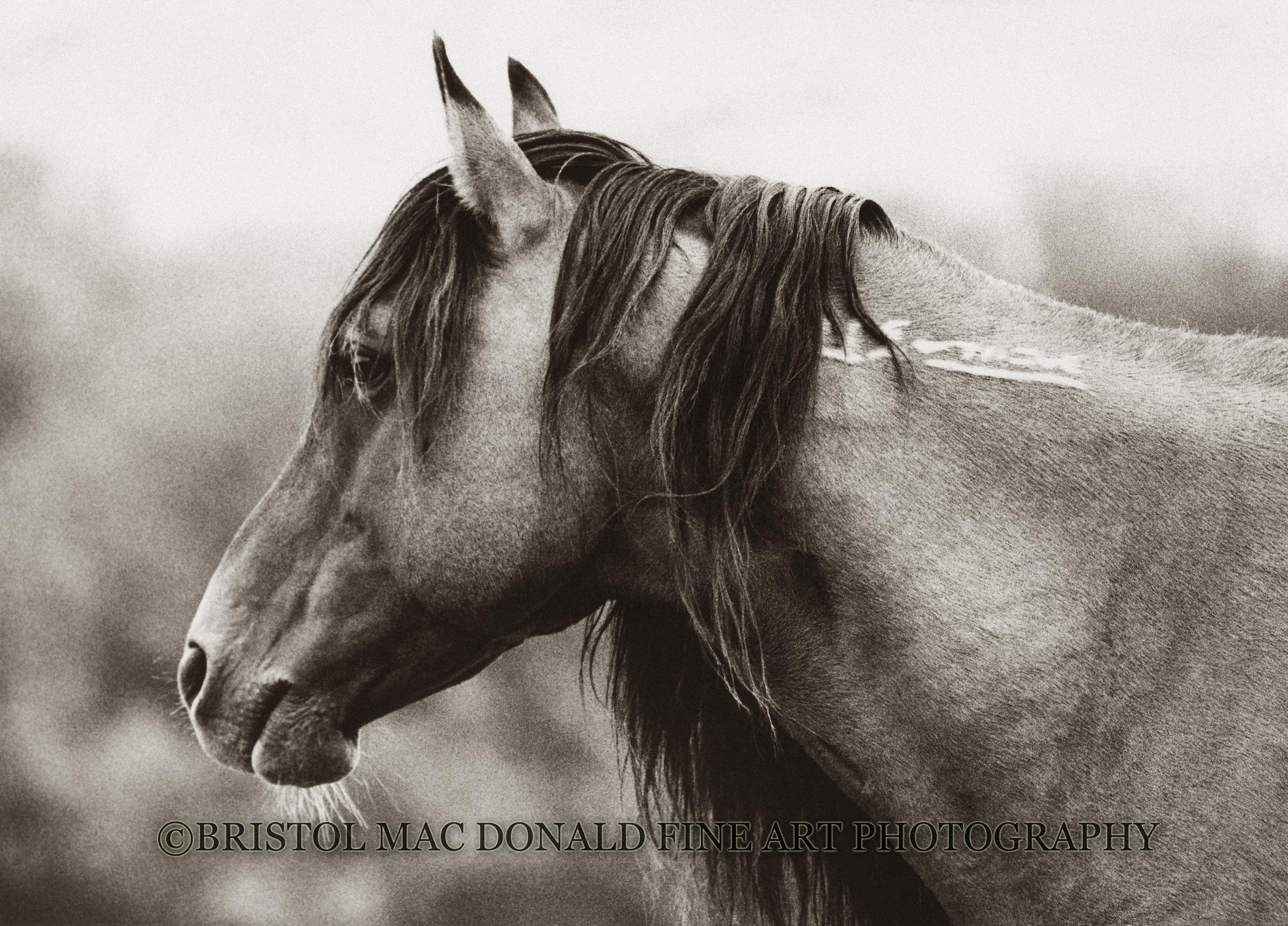 Soul of a Stallion