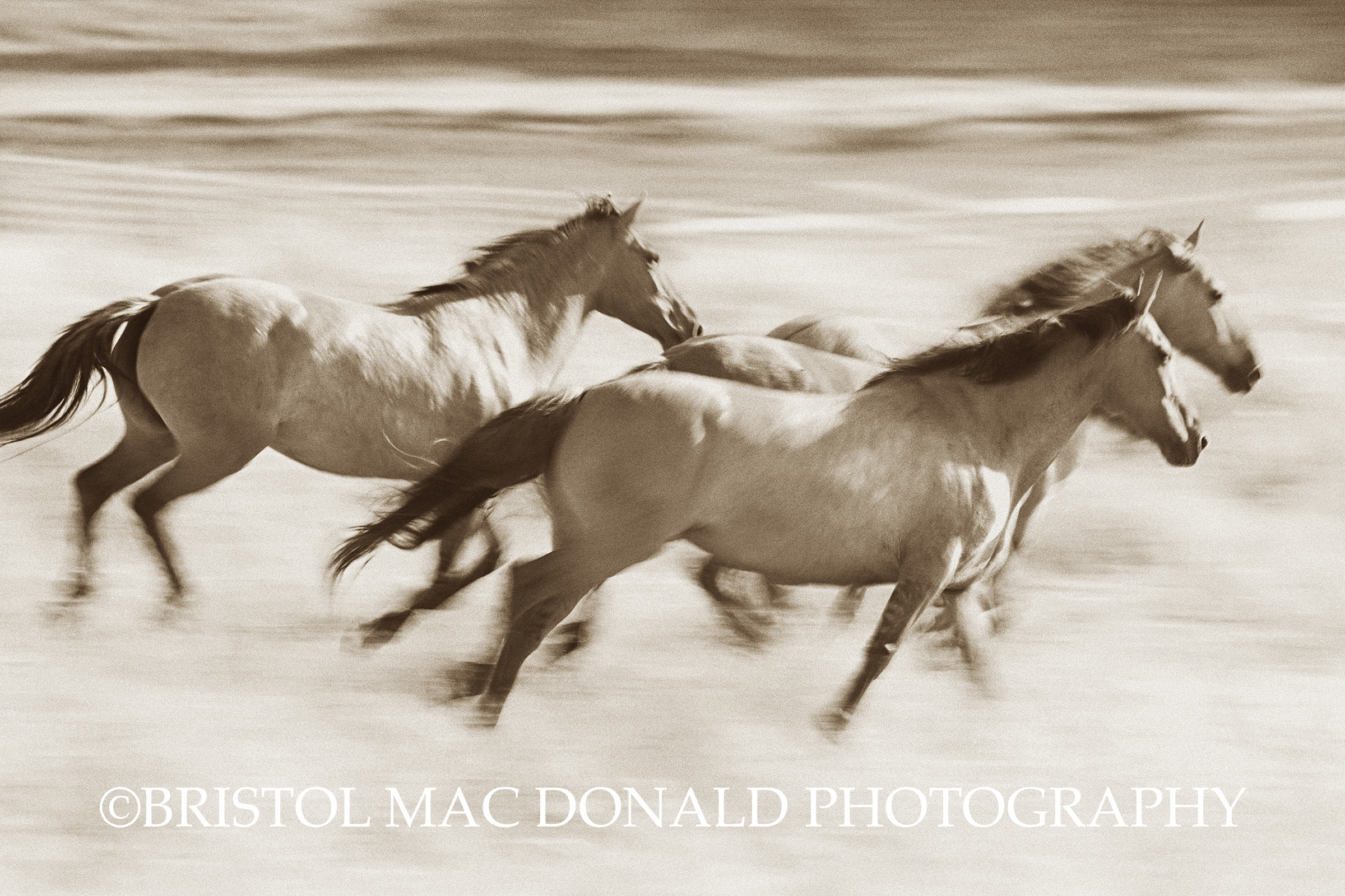 Mares in Flight