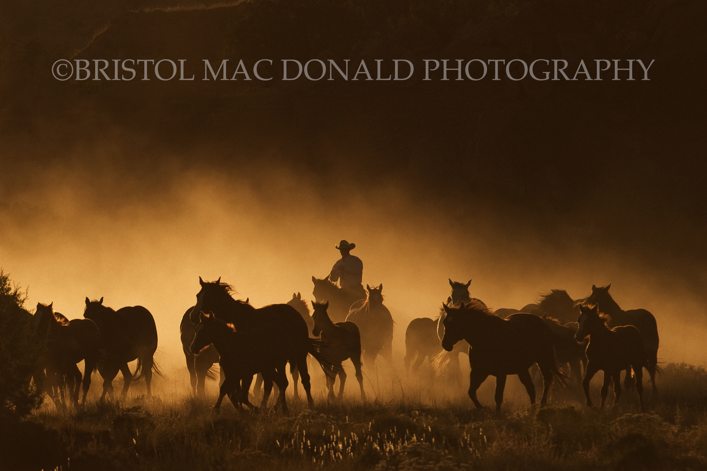 American Cowboy 1