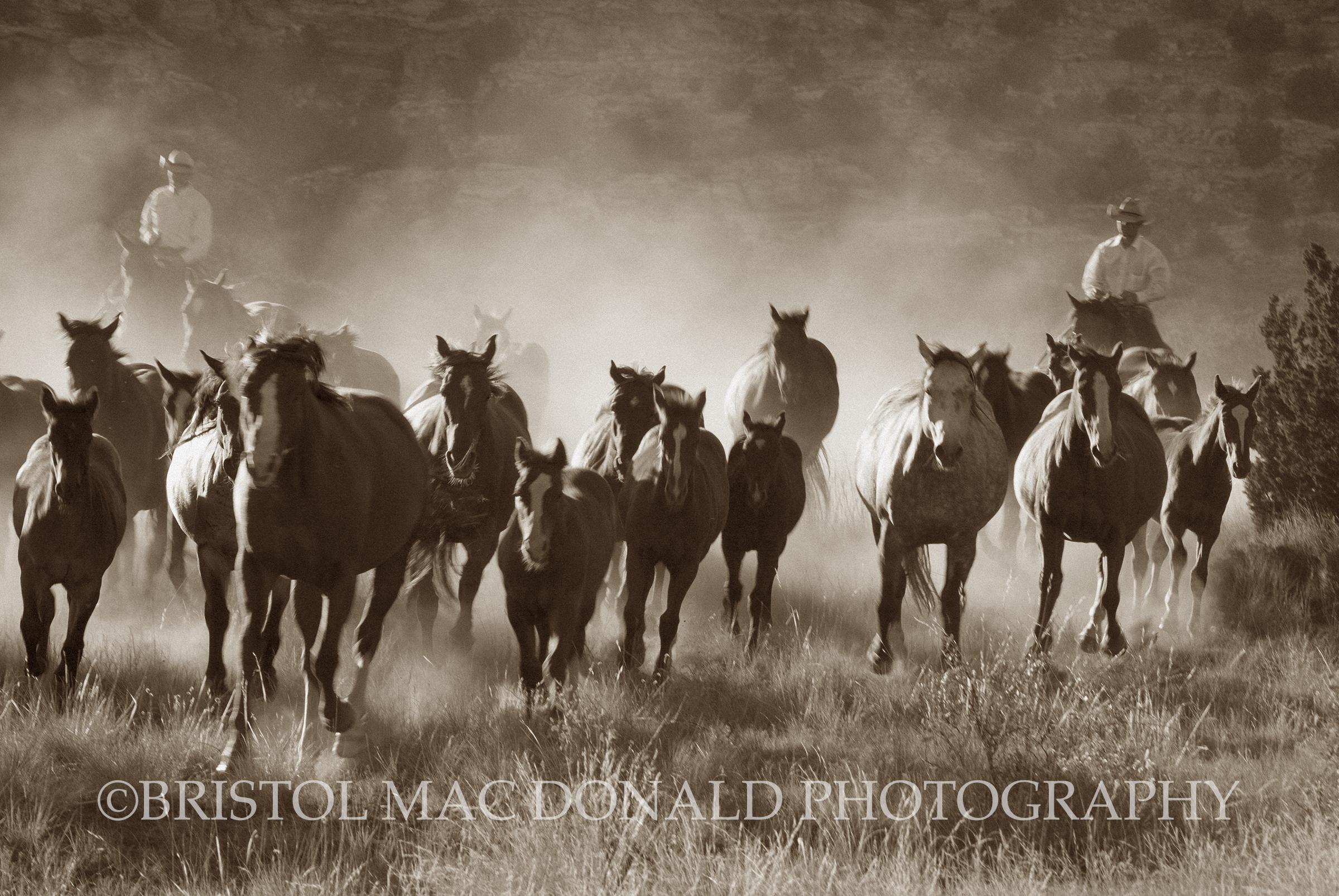American Cowboy 5