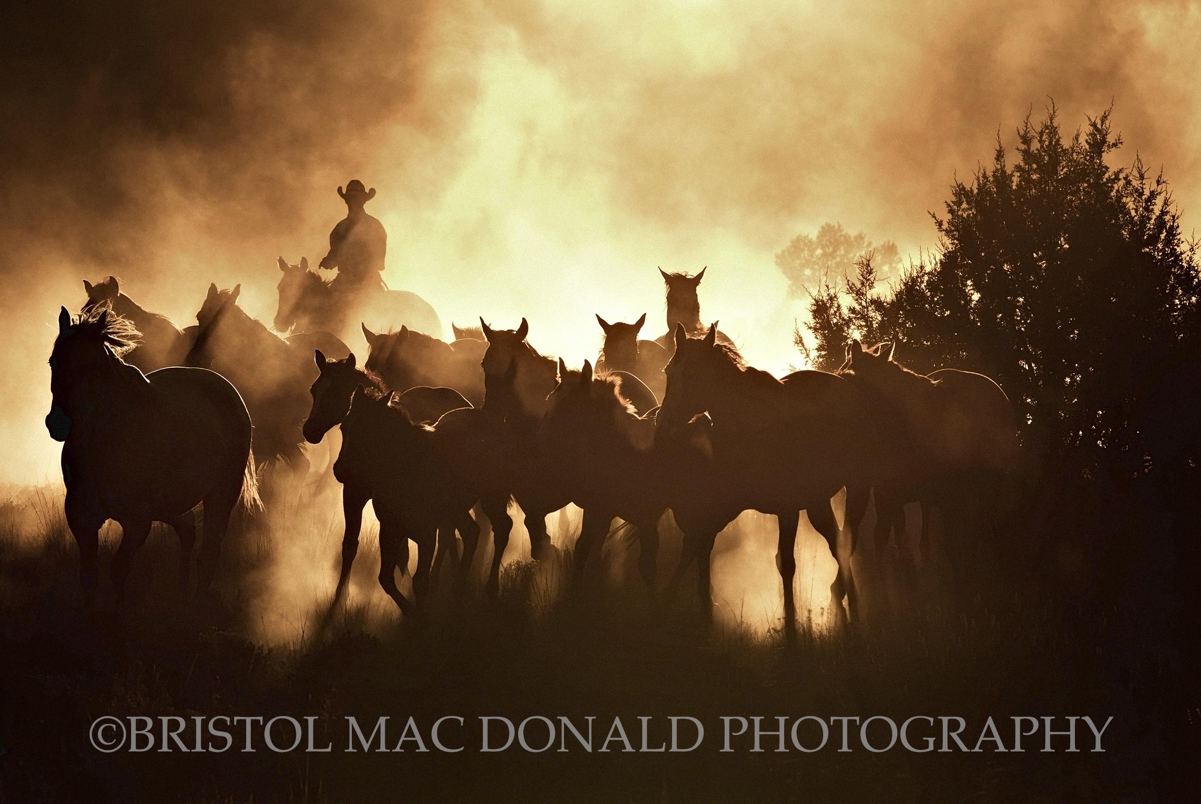 American Cowboy 8