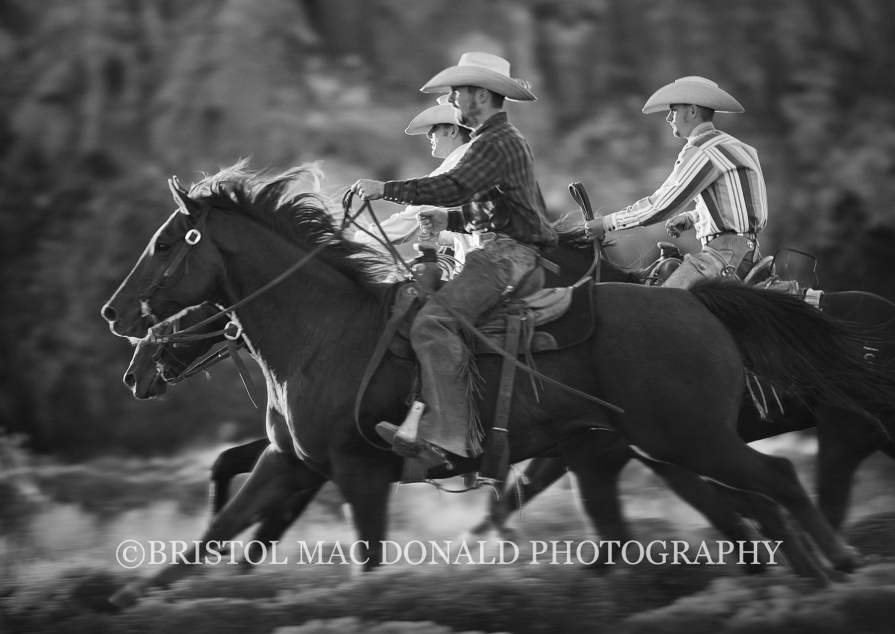 American Cowboy 15