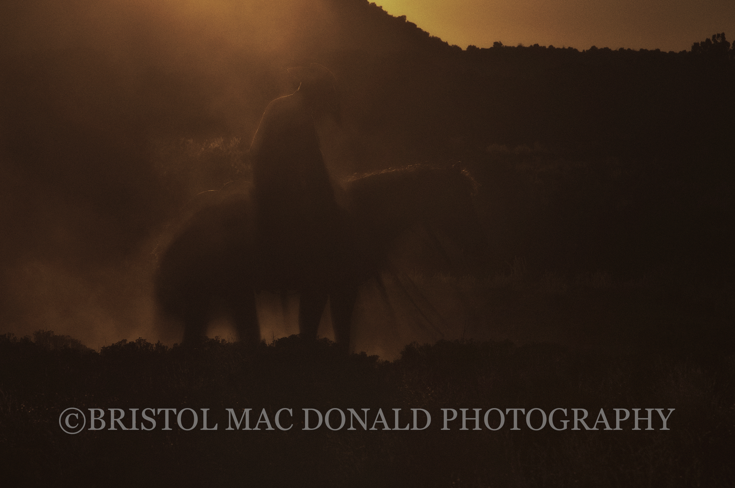 American Cowboy 16
