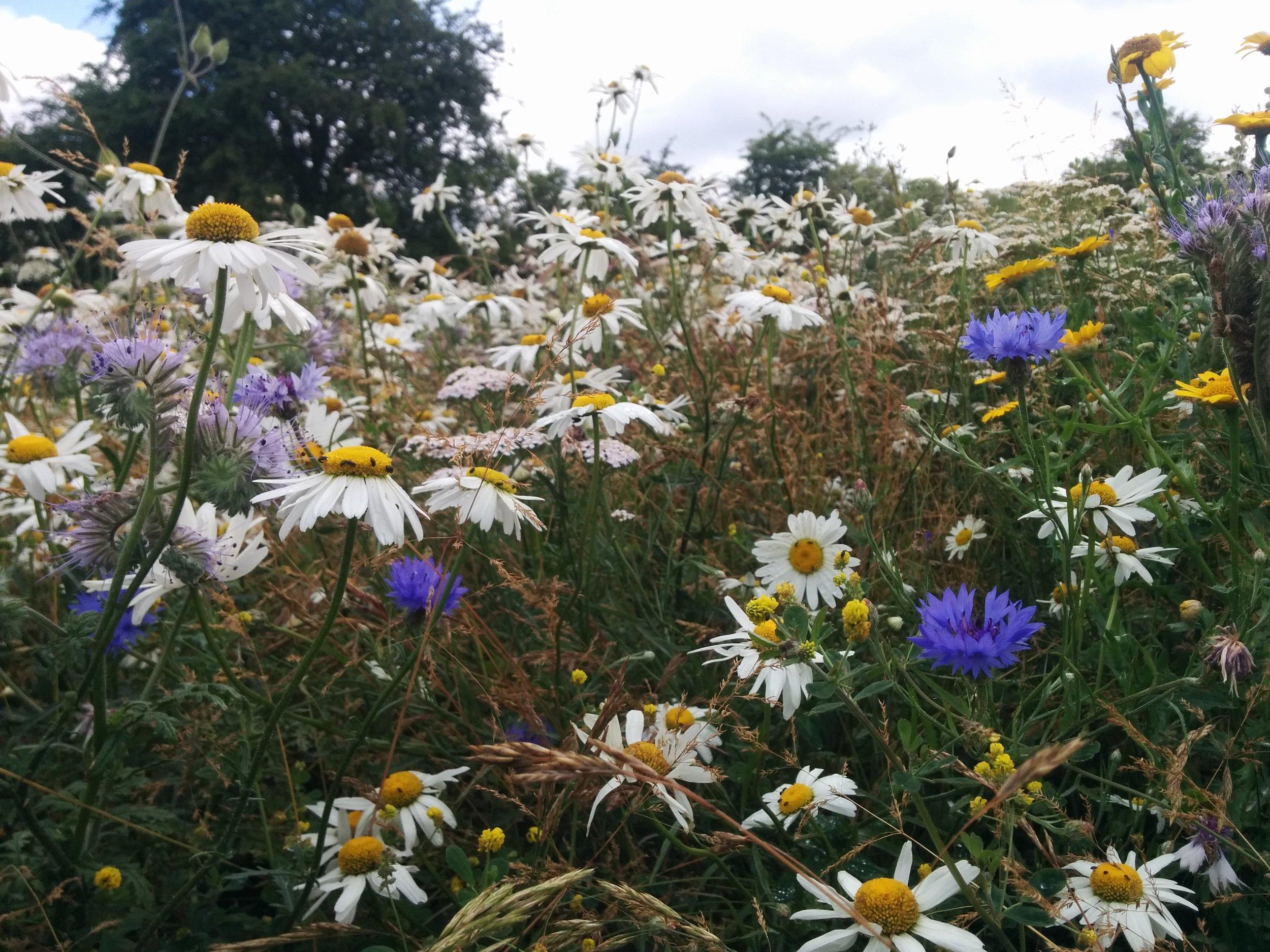 Mead's meadow wilstone