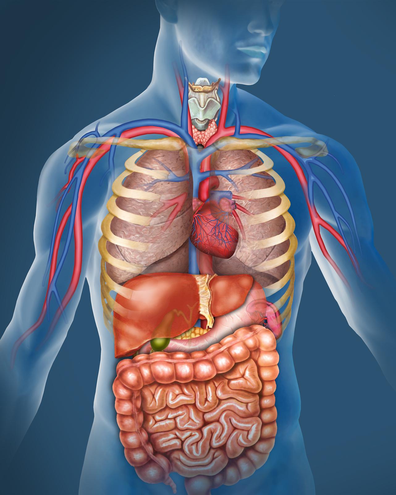 improve our abdominal health