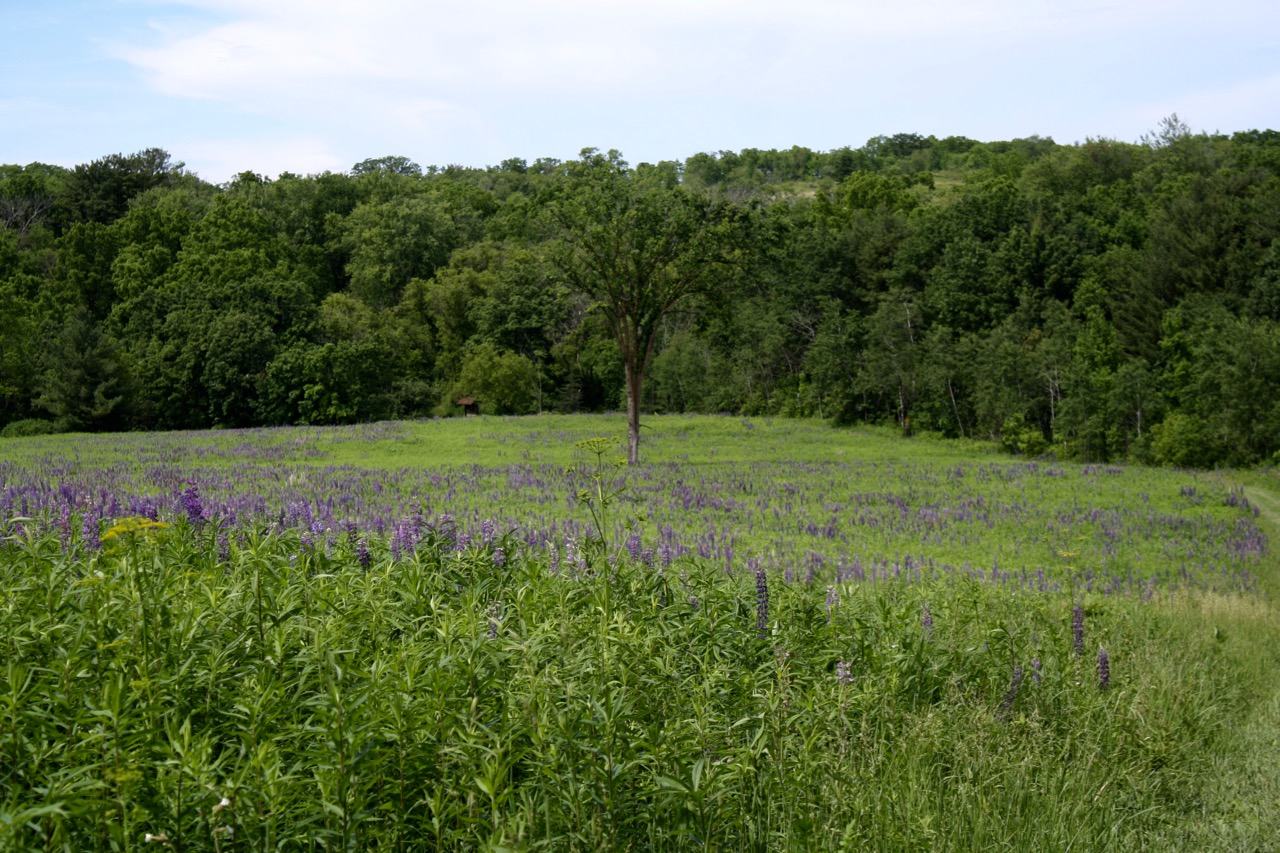 Green Field,Governor Dodge State Park