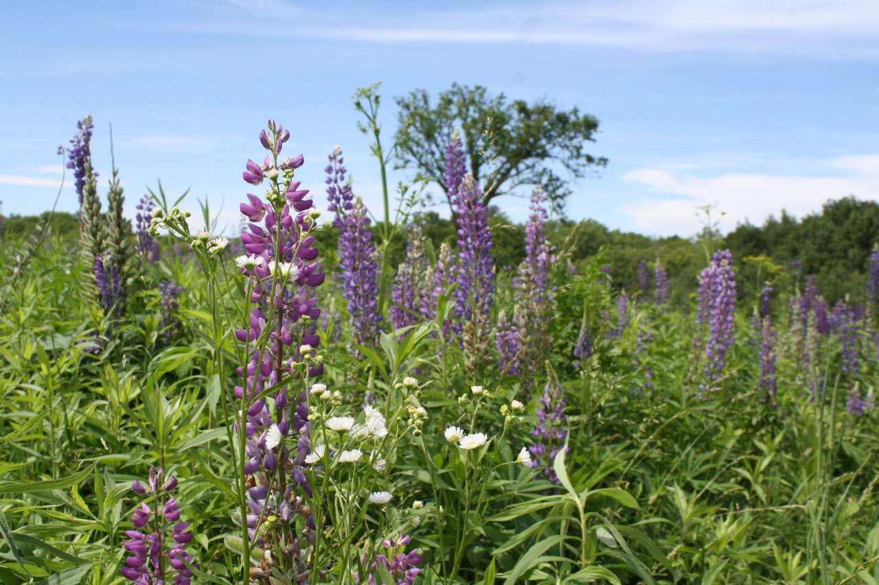 Flower mix,Governor Dodge State Park