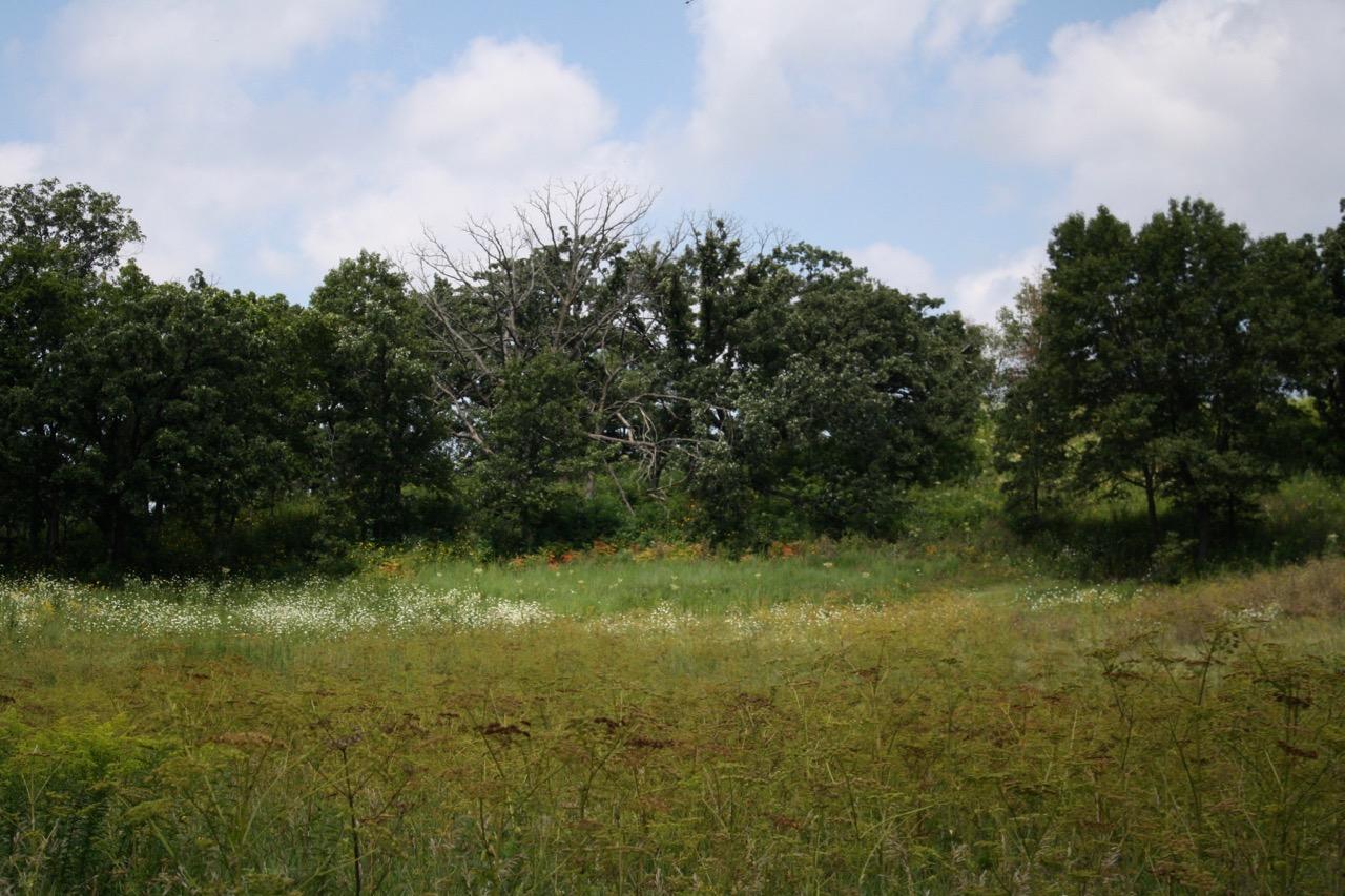 The open field