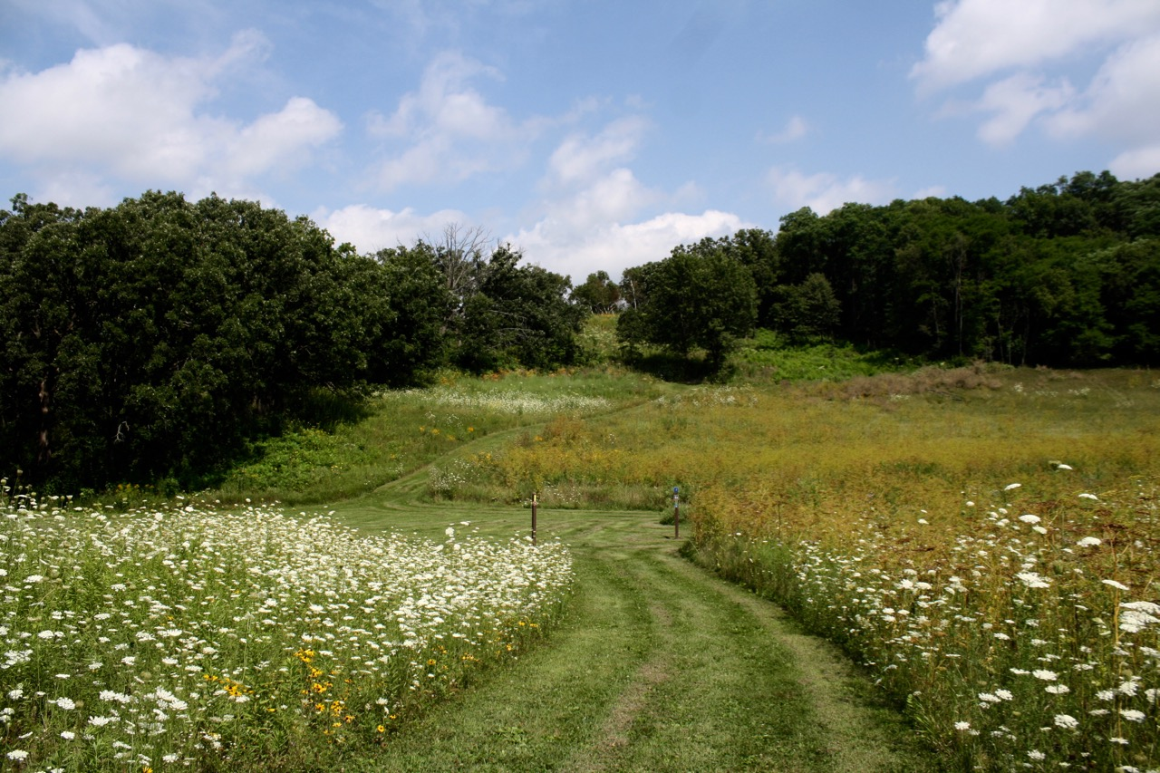 Mowed field and our trail