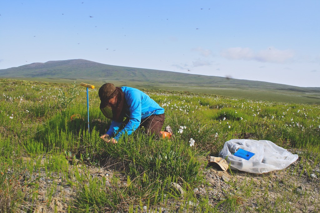 Soil Coring, Thermokarst Project - Toolik