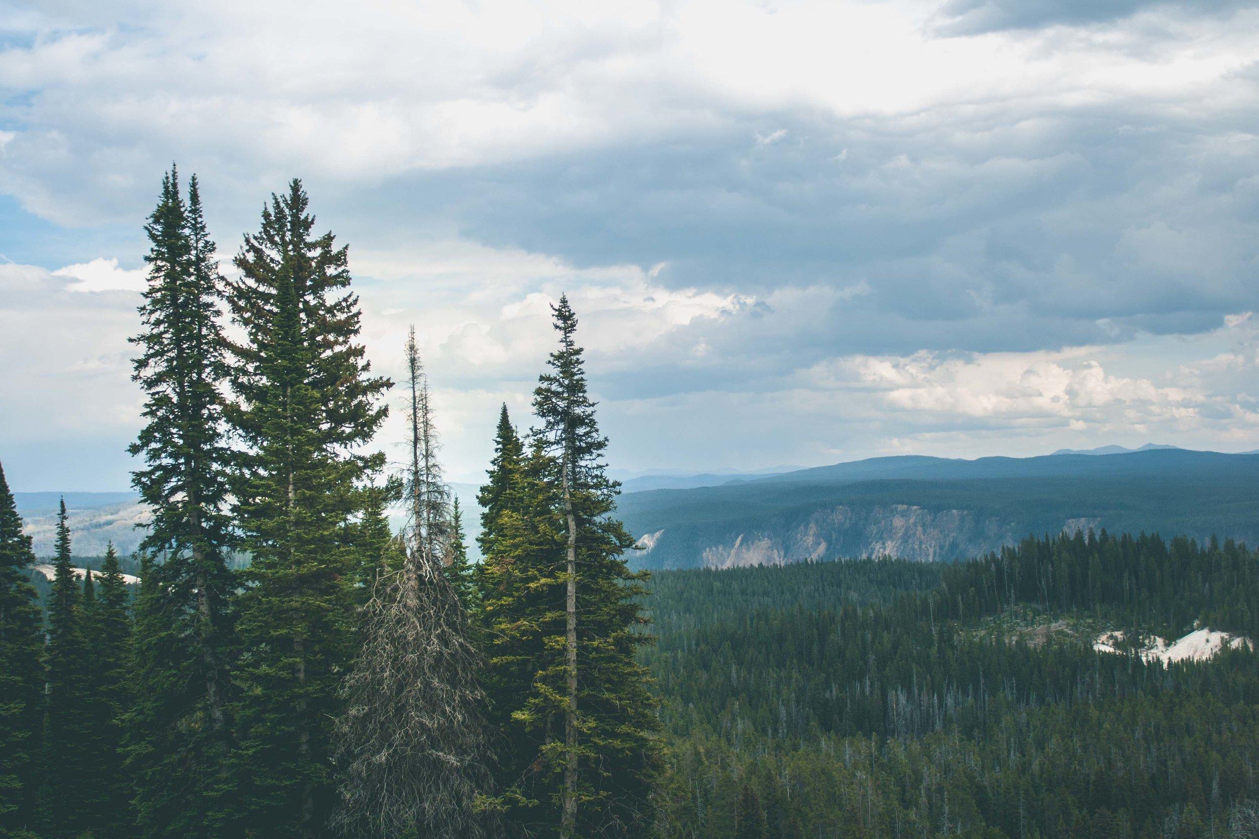 Yellowstone National Park, Wyoming. August 2017