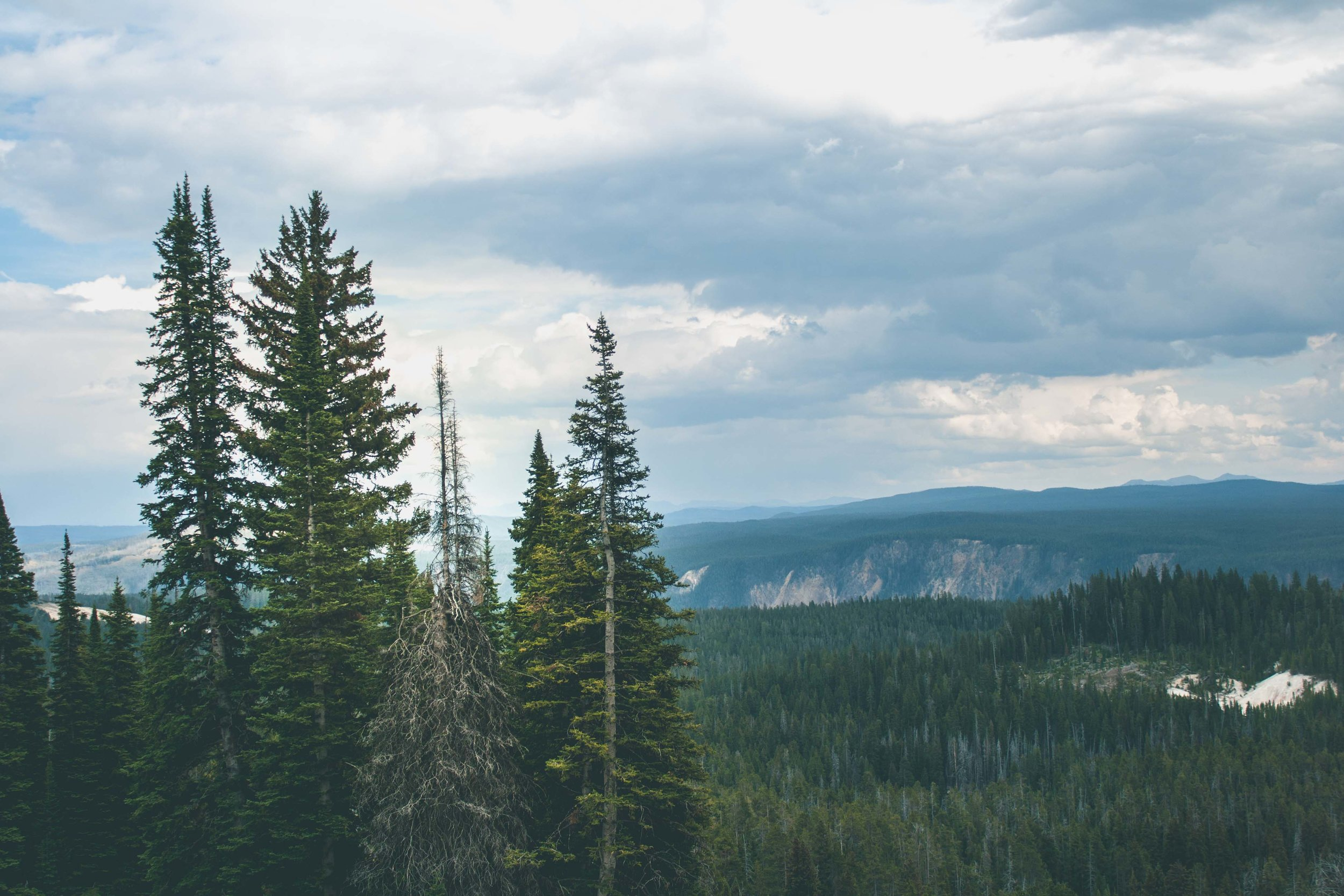Yellowstone National Park, Wyoming. Augusti 2017
