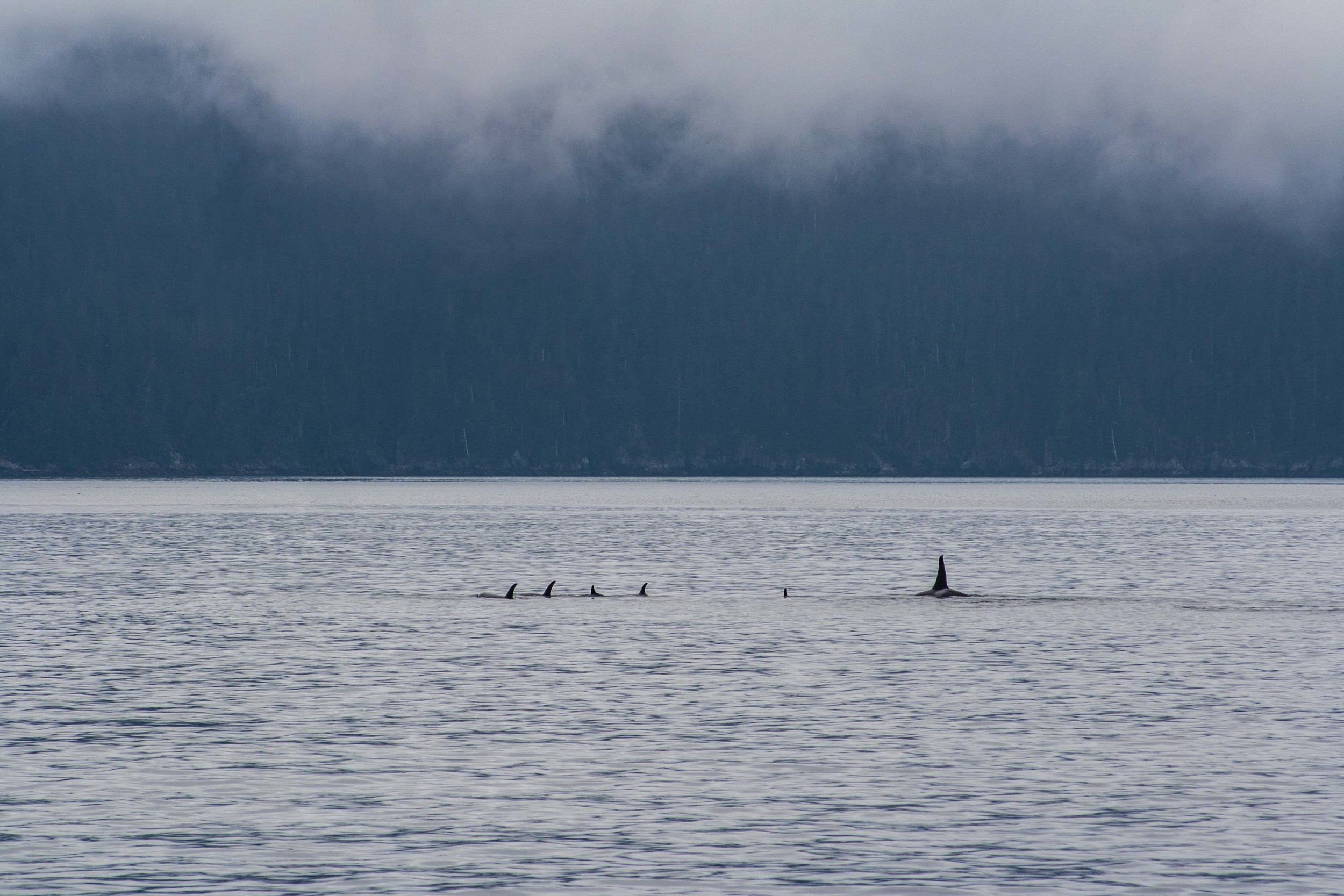 Kenai Fjords National Park, Alaska. August 2014