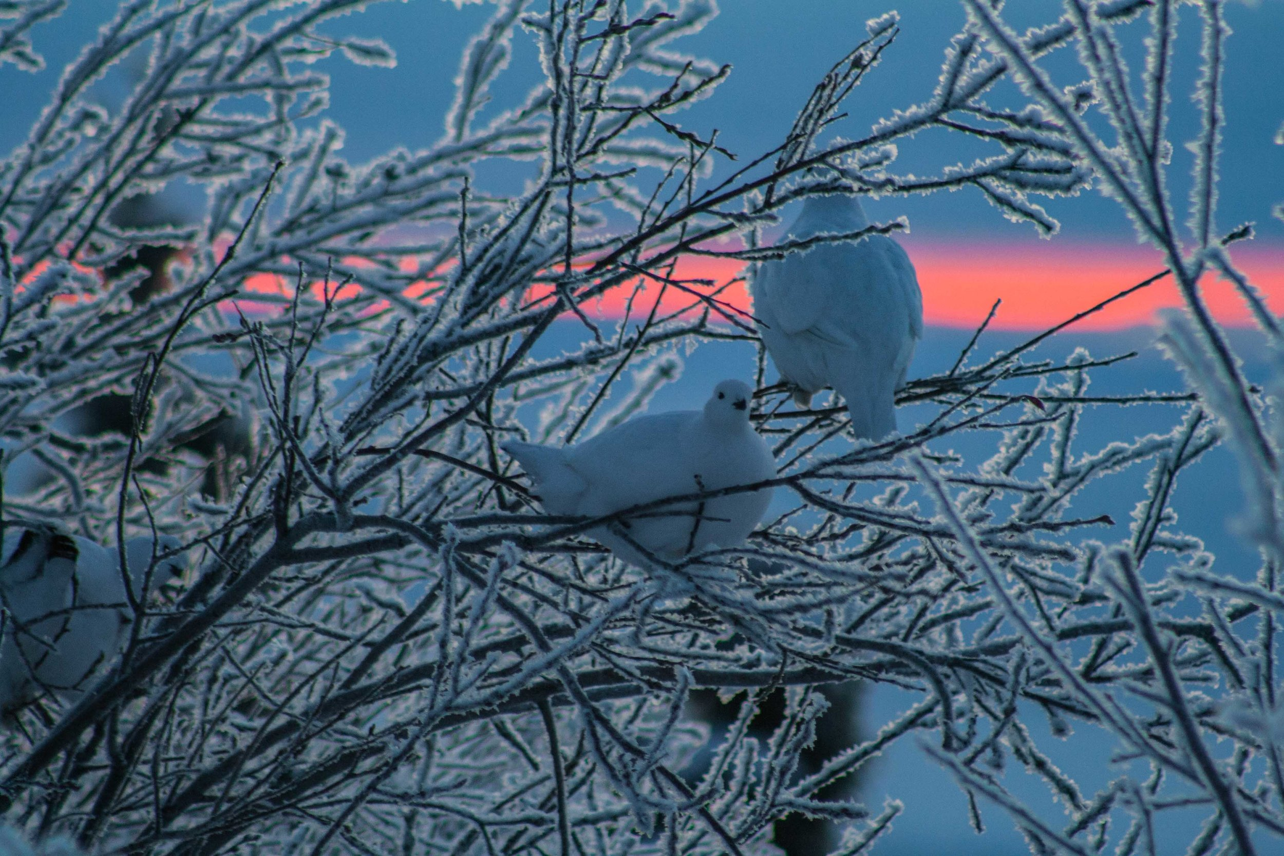 Fairbanks, Alaska. December 2015
