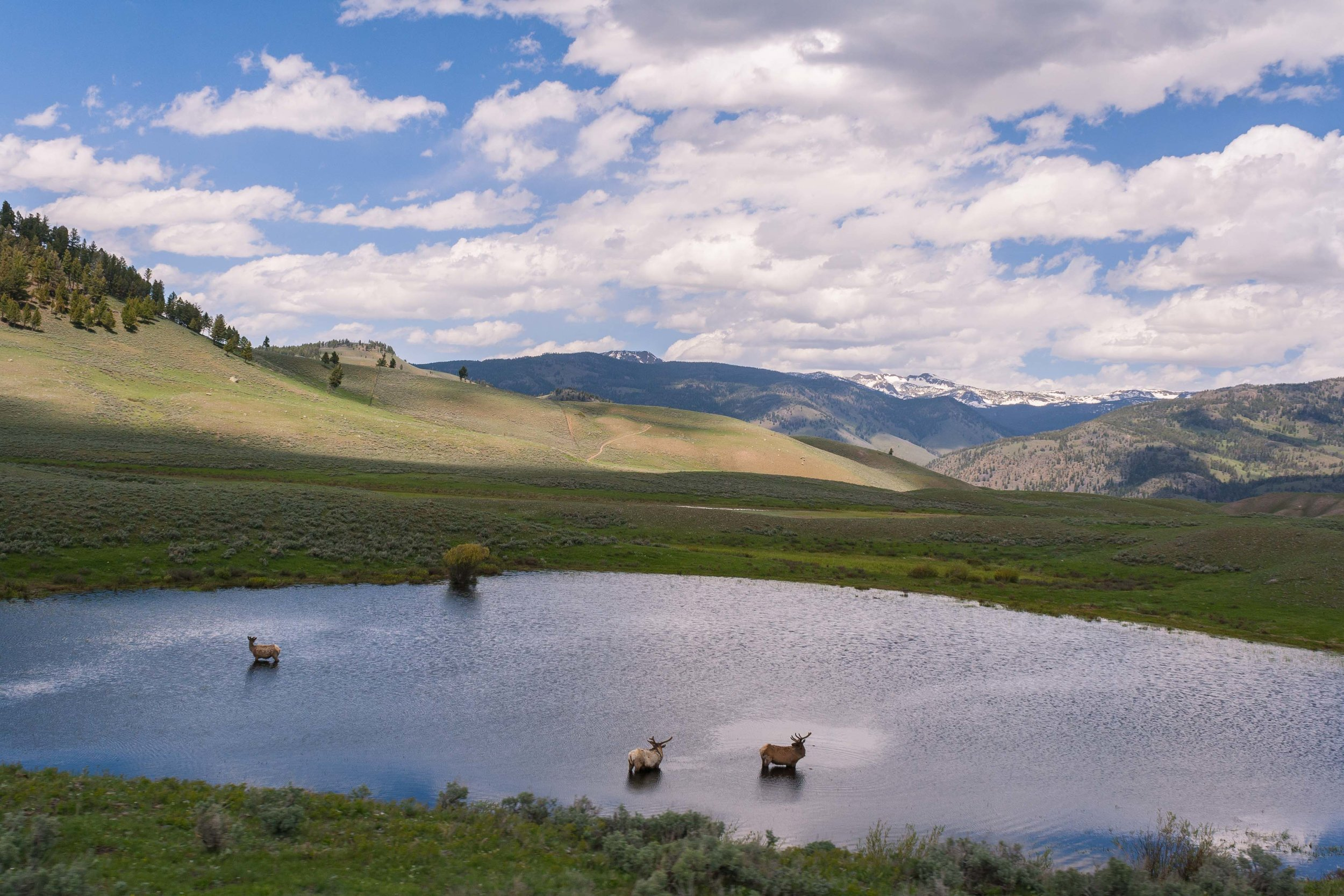 Yellowstone National Park, May 2014