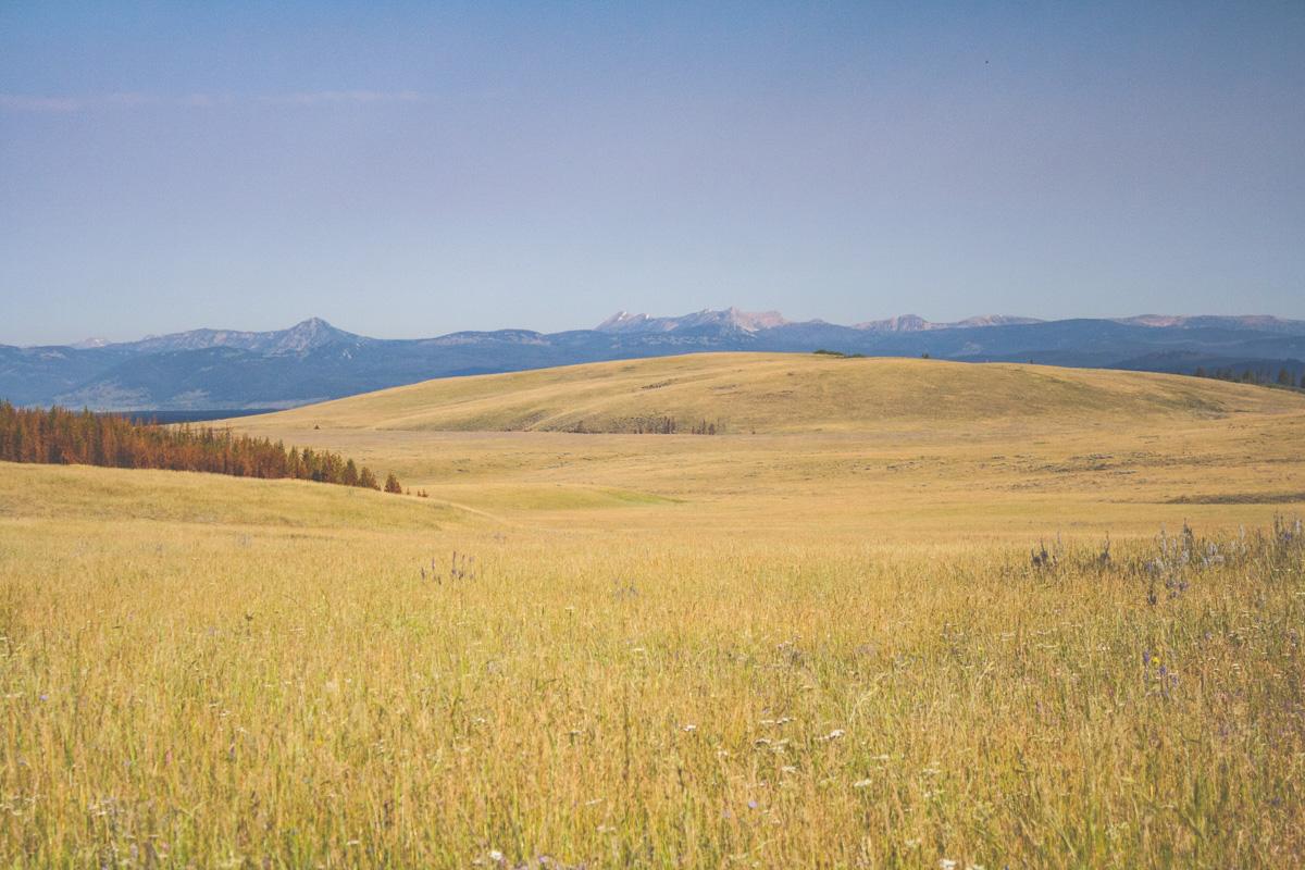 Cougar Meadow