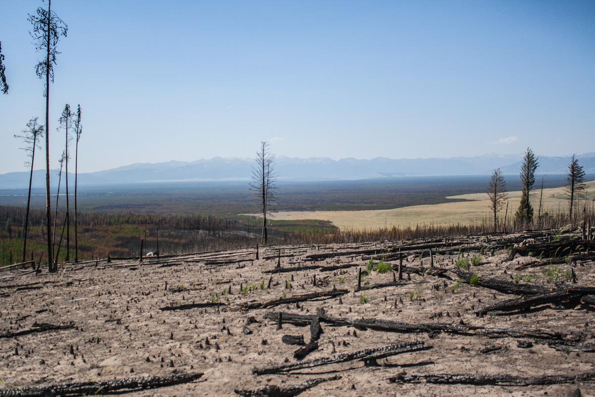 Brandhärjat område med stockar, spökstockar, och barmark på toppen av en kulle.