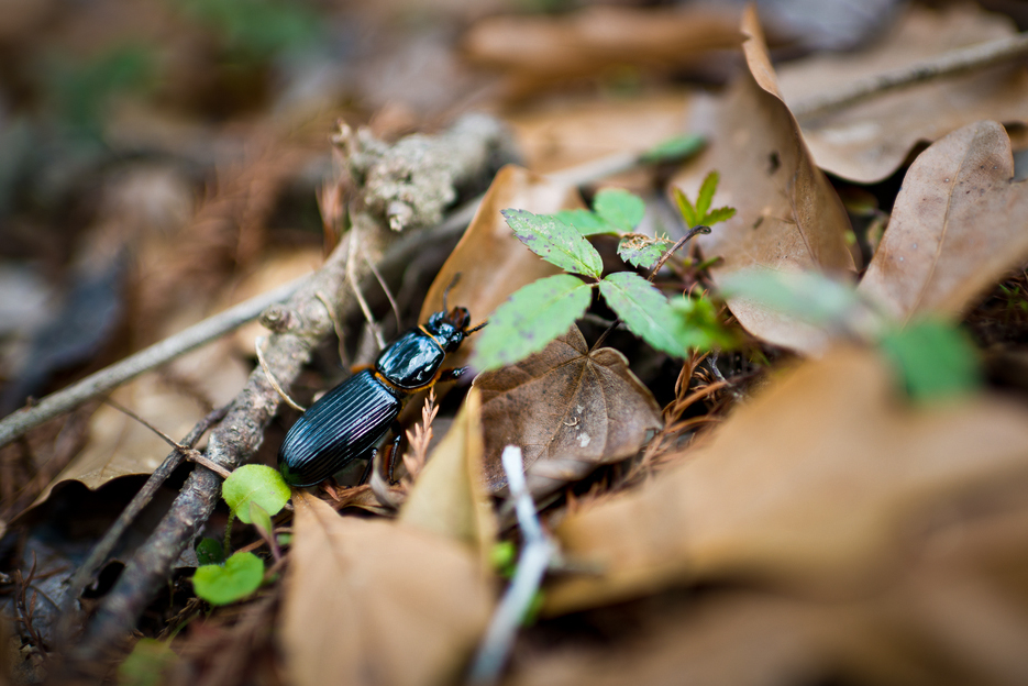 Southern-Fly-Expeditions-Share-9.jpg