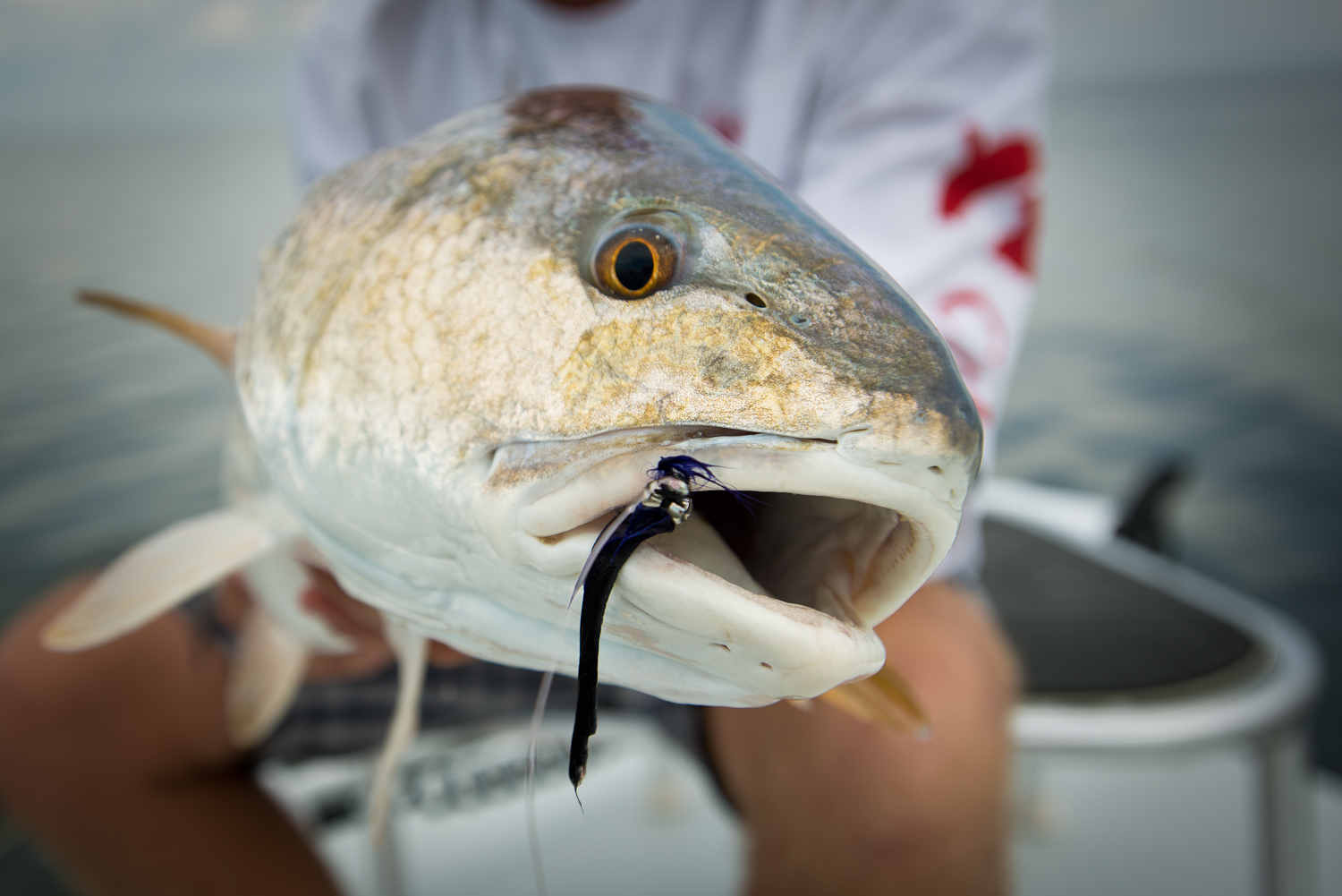 Louisiana Fly Fishing Trips Southern Fly Expeditions New Orleans