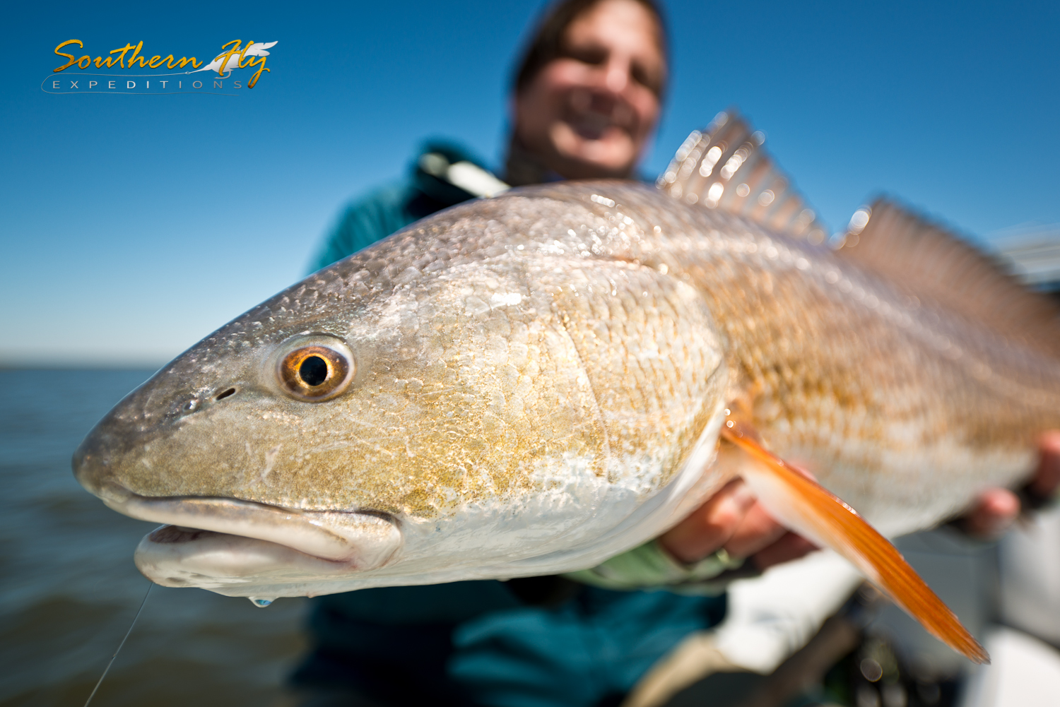 Casting for Redfish hooks a Good Sized Redfish Southern Fly Expeditions New Orleans Louisiana Fly Fishing
