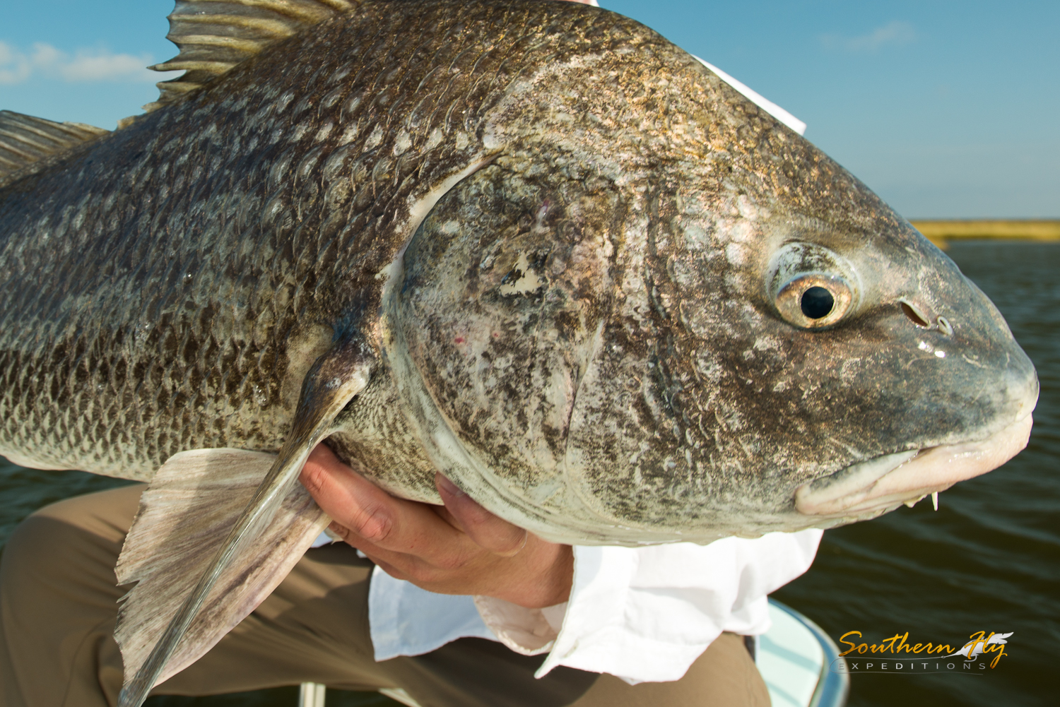 charter fly fishing New Orleans for blackdrum - Southern Fly Expeditions