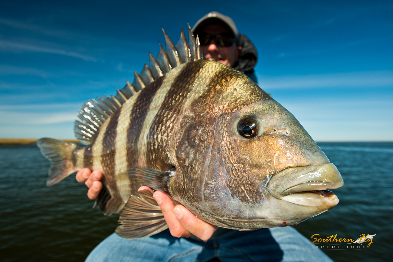 Monster Sheepshead Spin Fishing with Southern Fly Expeditions